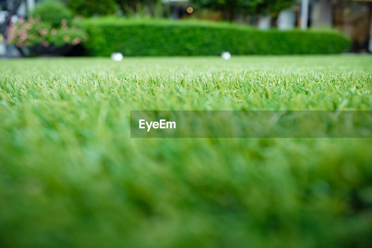 grass, green color, plant, sport, selective focus, no people, day, surface level, growth, nature, land, outdoors, field, beauty in nature, playing field, close-up, soccer, tranquility, absence, soccer field, purity
