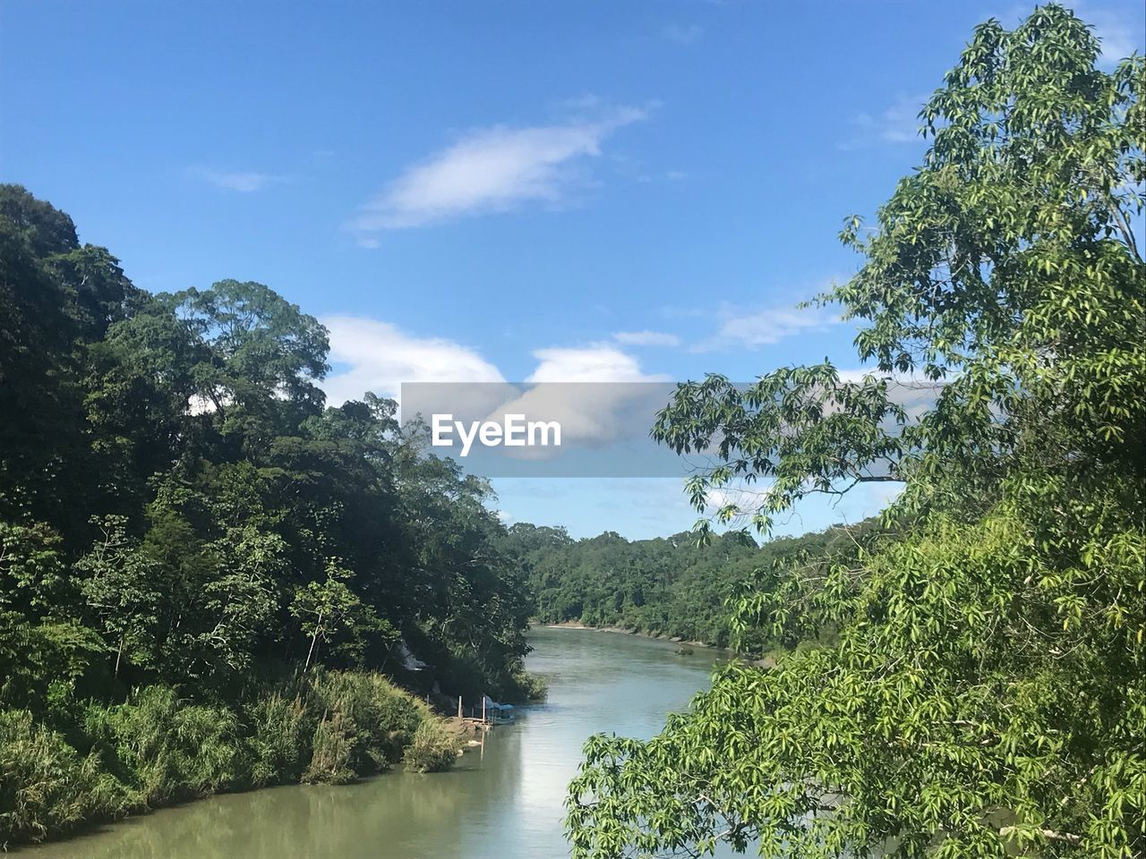 tree, water, plant, sky, beauty in nature, cloud - sky, tranquility, nature, scenics - nature, growth, river, green color, tranquil scene, day, no people, forest, environment, non-urban scene, outdoors
