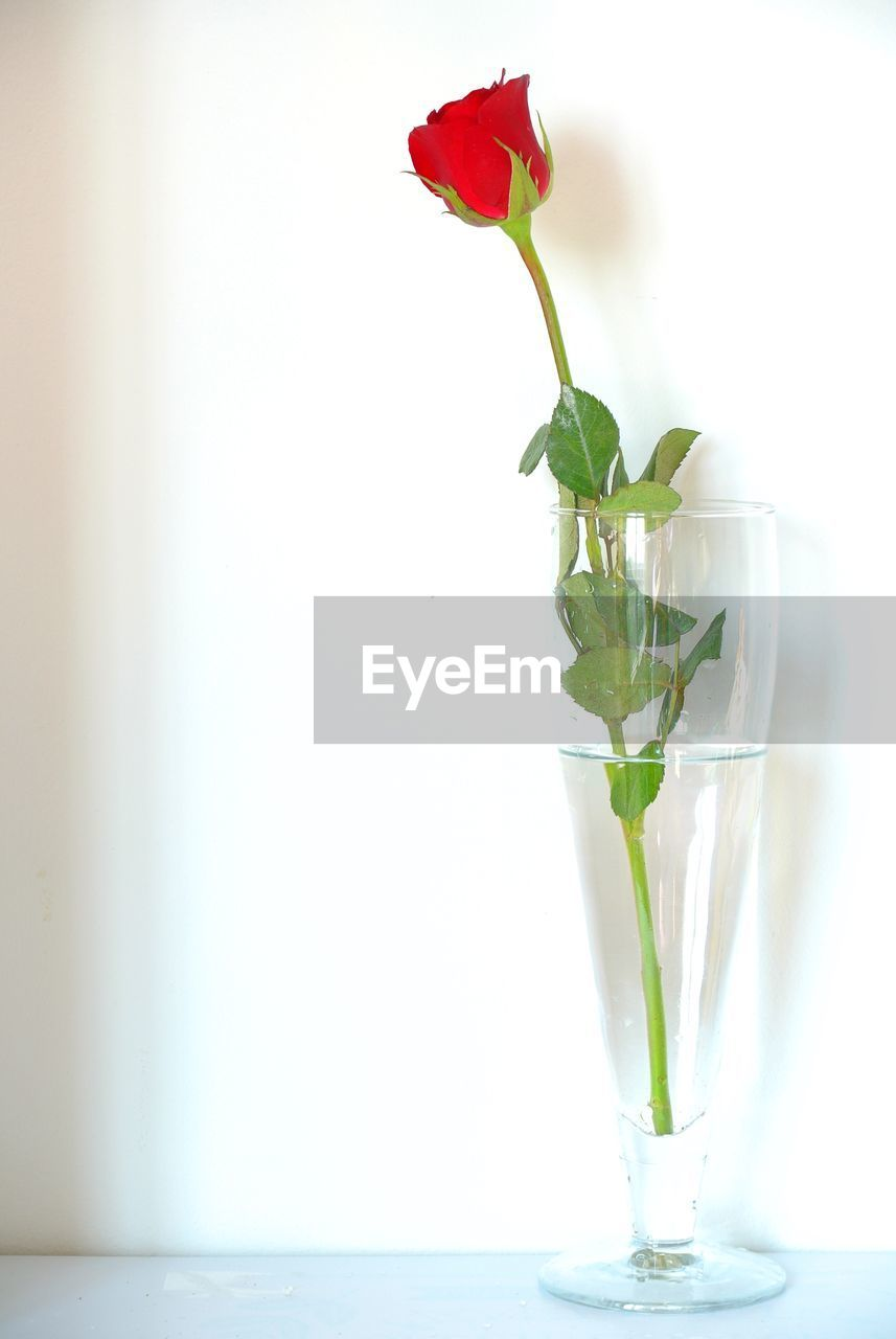 flower, vase, white background, freshness, nature, petal, no people, beauty in nature, close-up, water, growth, fragility, leaf, flower head, day, indoors