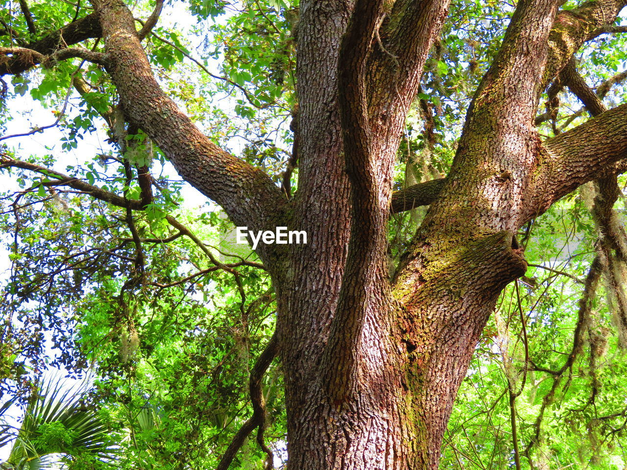 tree, plant, tree trunk, trunk, growth, low angle view, nature, beauty in nature, tranquility, day, forest, no people, green color, land, branch, outdoors, plant part, woodland, leaf, tranquil scene, tree canopy