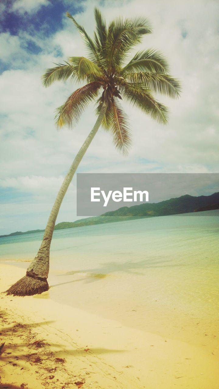 Palm Tree On Calm Beach Against Clouds