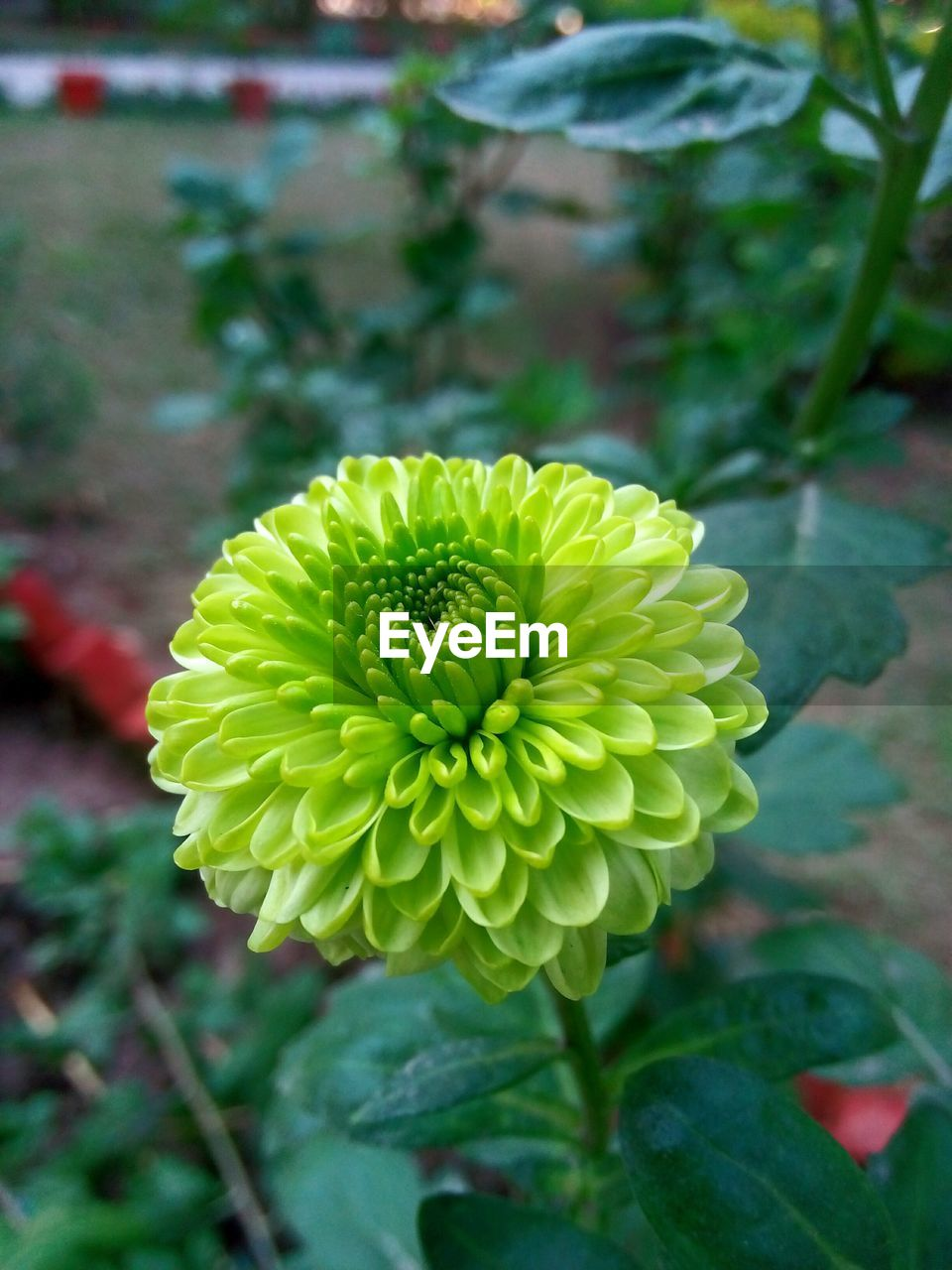 flower, beauty in nature, fragility, petal, freshness, nature, flower head, growth, plant, focus on foreground, day, yellow, close-up, outdoors, no people, blooming