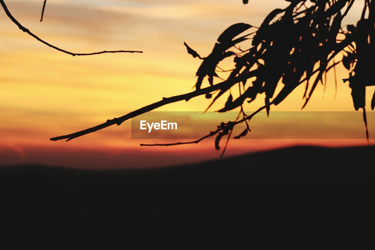 sunset, silhouette, orange color, nature, beauty in nature, outdoors, no people, tranquility, tranquil scene, growth, sky, plant, scenics, close-up, day
