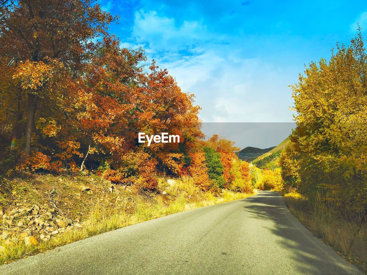 autumn, tree, road, the way forward, nature, change, orange color, beauty in nature, tranquil scene, scenics, outdoors, leaf, day, tranquility, sky, no people, transportation, yellow, landscape, growth