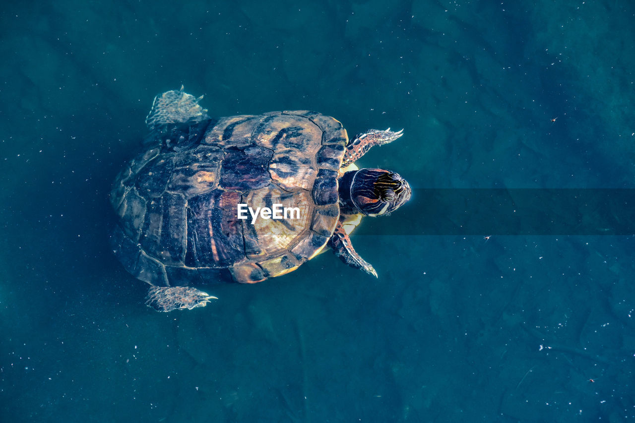 animal wildlife, animal themes, animal, water, animals in the wild, turtle, sea, swimming, one animal, reptile, nature, shell, high angle view, underwater, waterfront, no people, animal shell, marine, sea life, outdoors, undersea