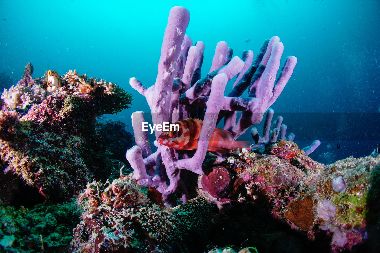 Underwater View Of Tropical Fish With Sponge