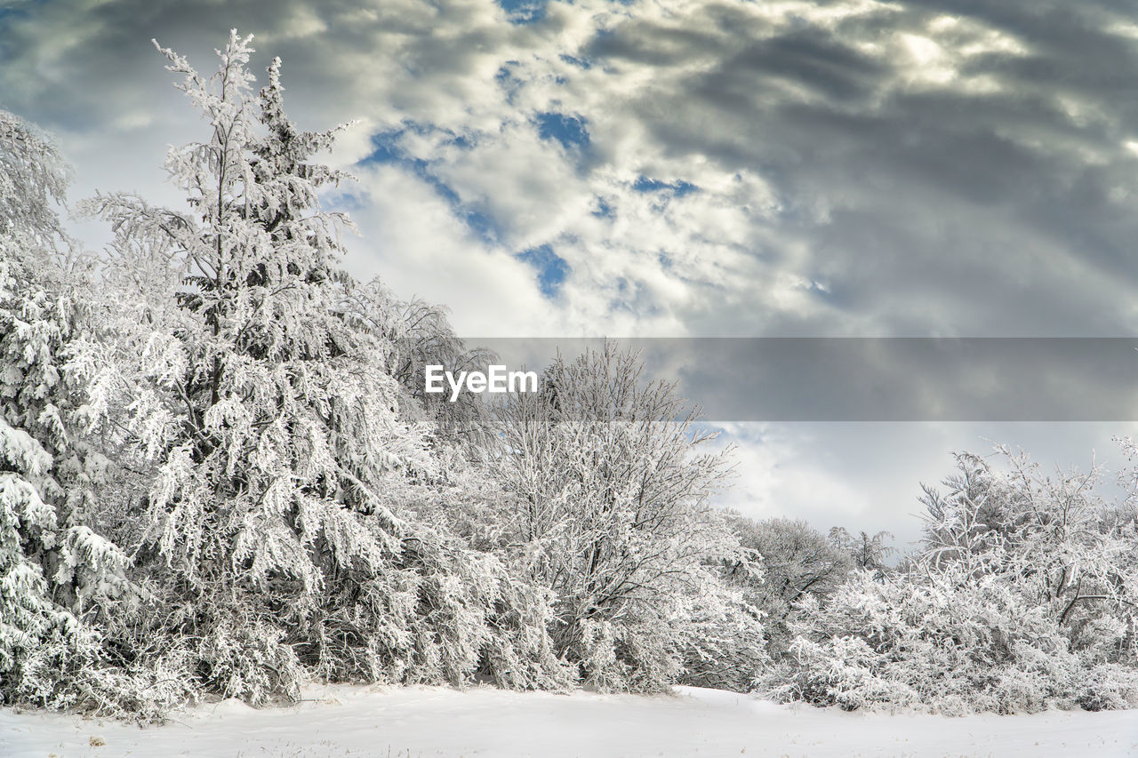 cloud - sky, tree, snow, sky, cold temperature, winter, plant, beauty in nature, nature, tranquil scene, tranquility, day, scenics - nature, no people, white color, covering, environment, non-urban scene, land, outdoors, woodland, coniferous tree