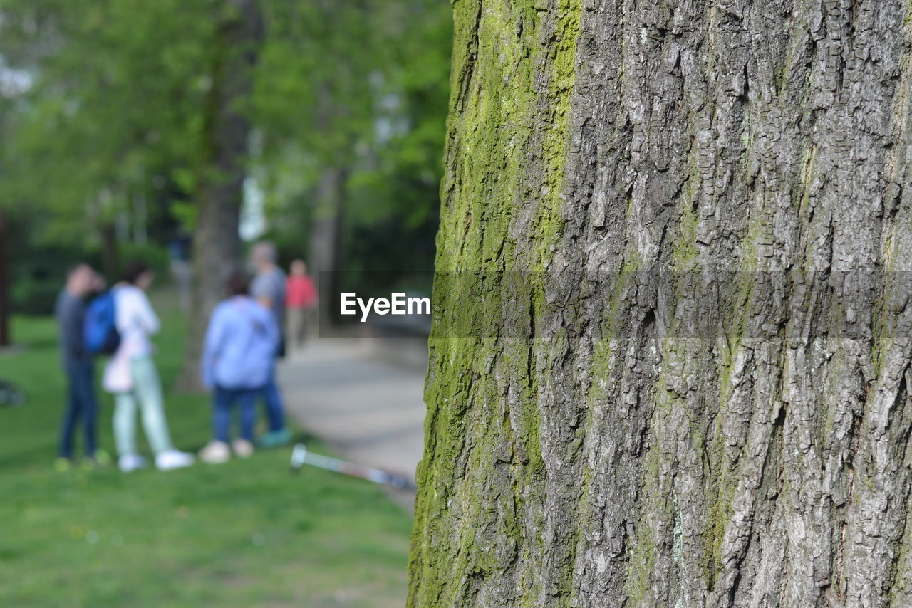 Close-Up Of Tree With People Standing In Background