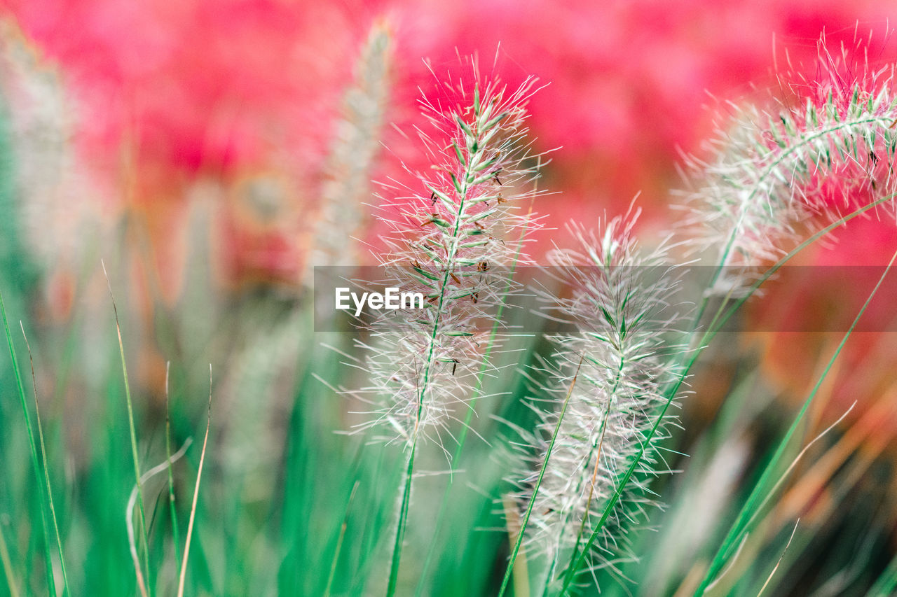 growth, nature, plant, beauty in nature, green color, no people, day, focus on foreground, outdoors, close-up, field, tranquility, freshness