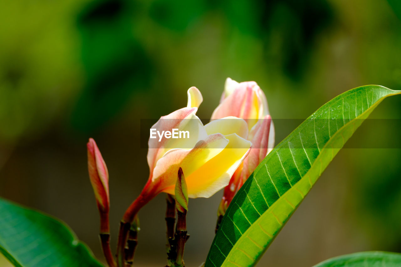 growth, nature, plant, beauty in nature, flower, close-up, petal, leaf, fragility, freshness, focus on foreground, green color, no people, day, outdoors, flower head, blooming