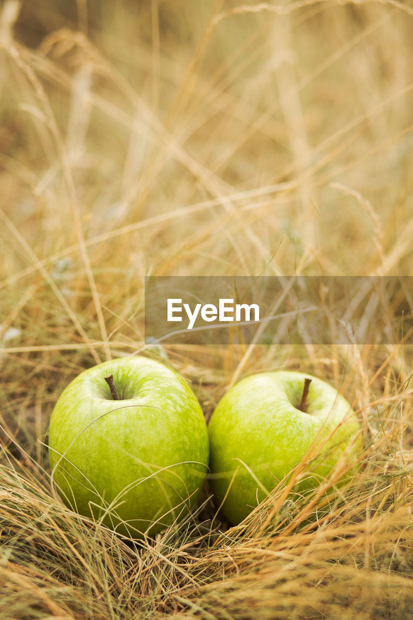 fruit, food and drink, green color, food, healthy eating, apple - fruit, freshness, no people, close-up, grass, nature, outdoors, day