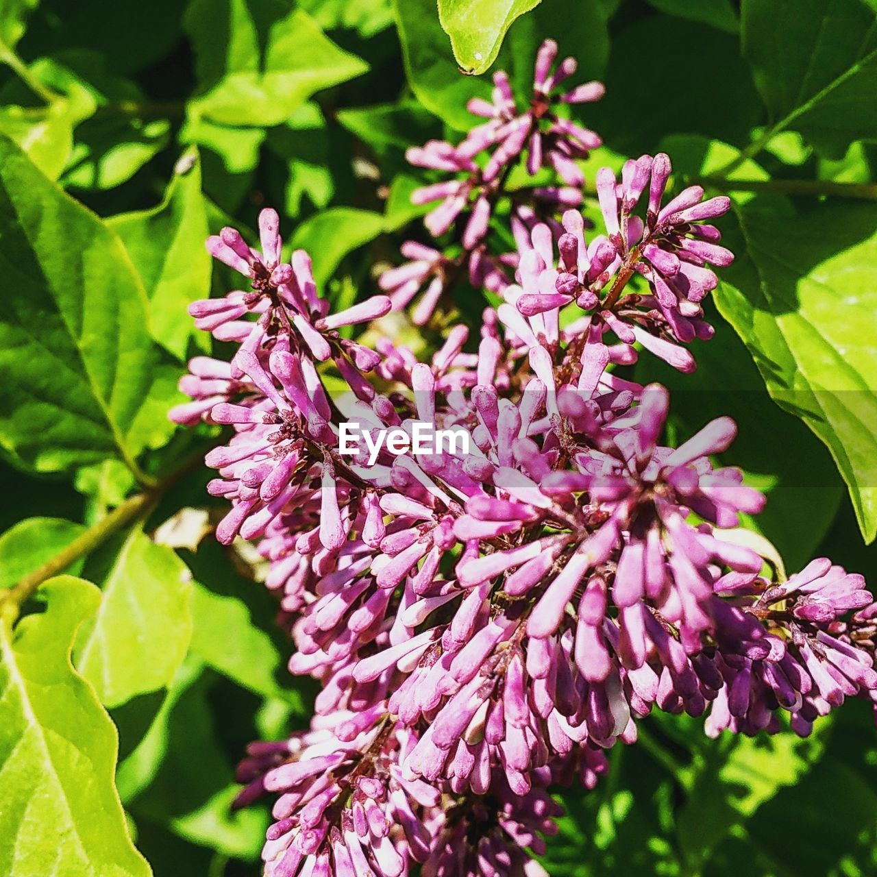 purple, growth, flower, nature, beauty in nature, fragility, plant, no people, petal, outdoors, freshness, leaf, day, pink color, close-up, lilac, flower head