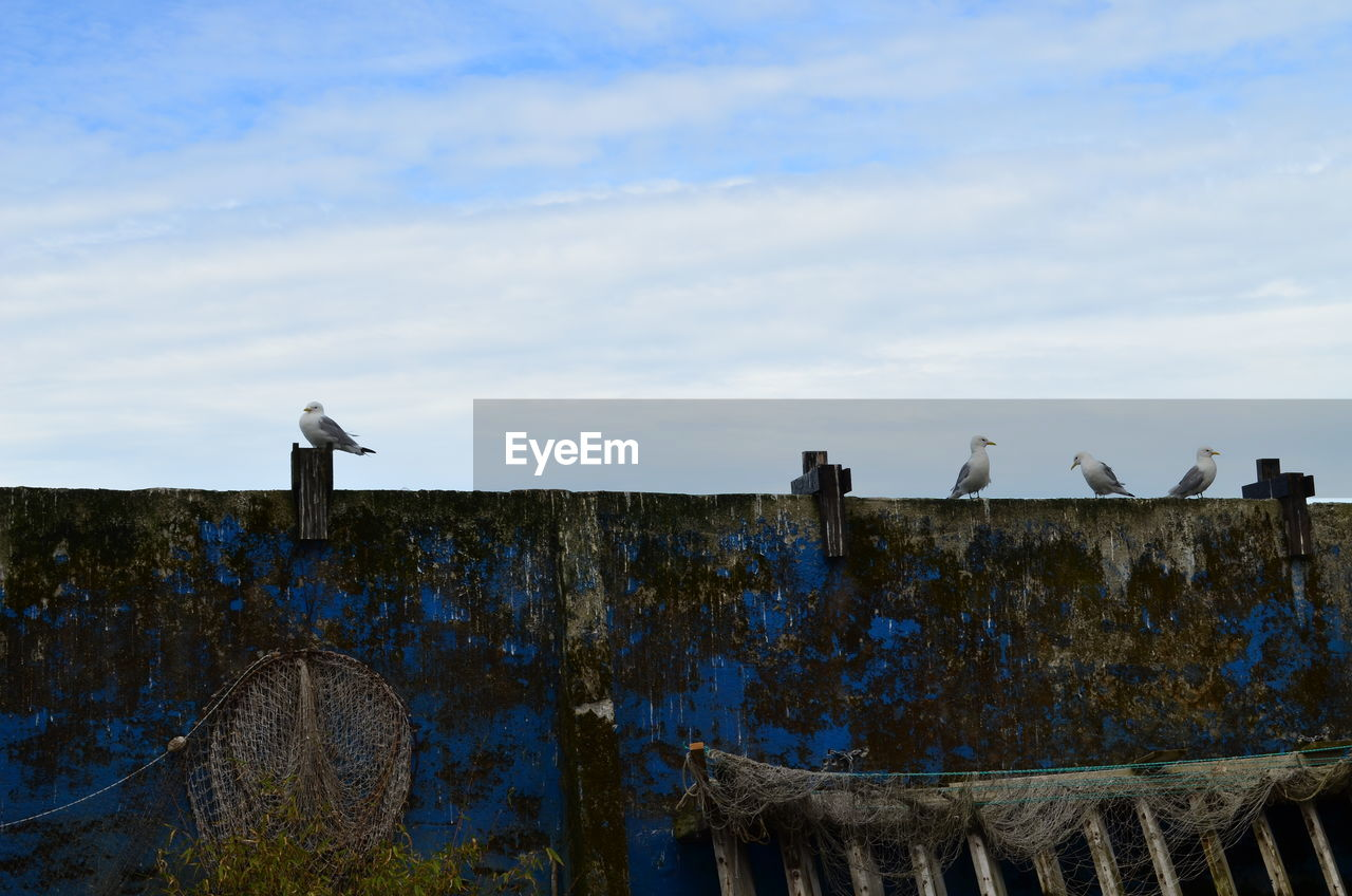 animal themes, animals in the wild, bird, animal wildlife, perching, cloud - sky, sky, day, outdoors, no people, nature, large group of animals, seagull, mammal