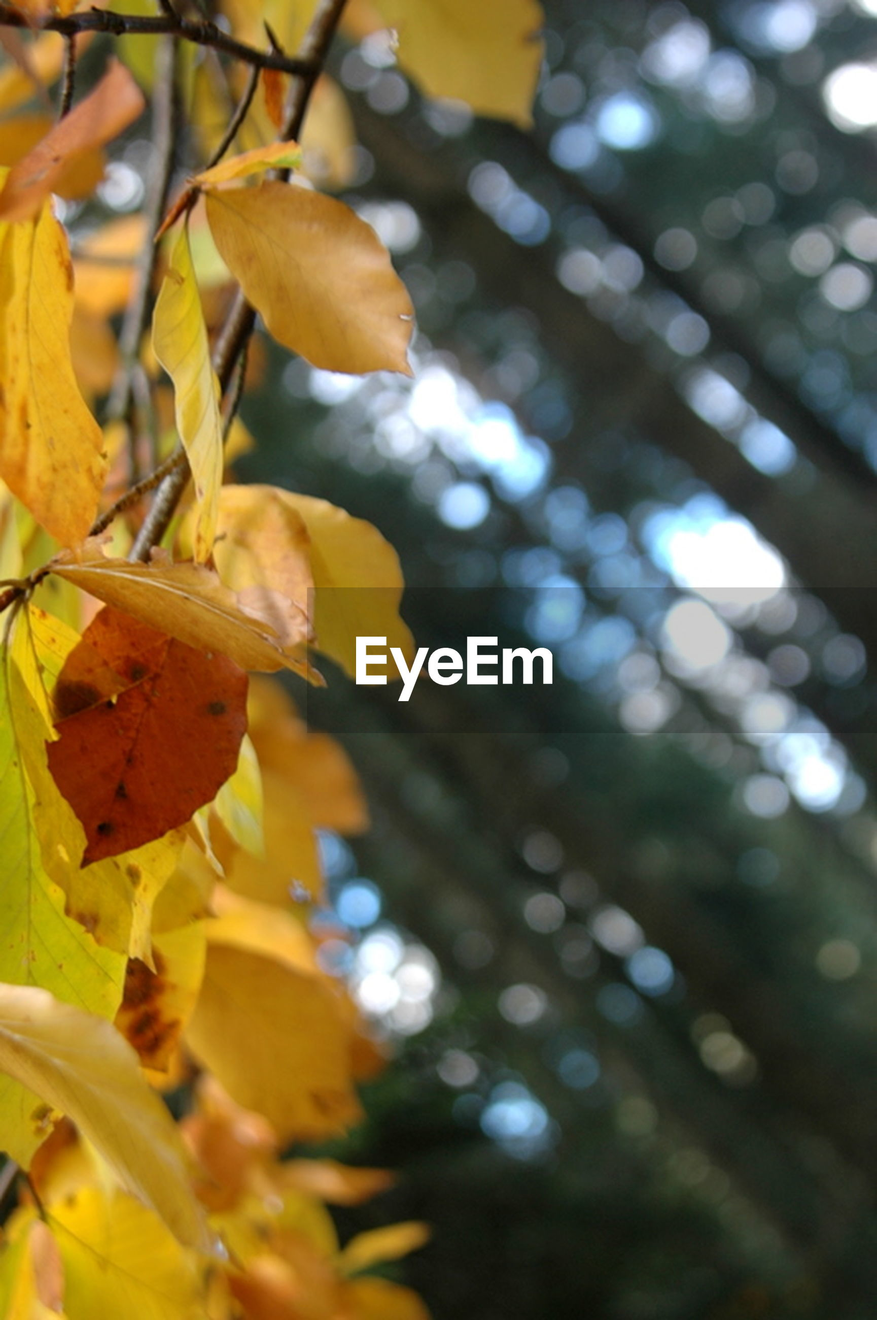 leaf, autumn, branch, growth, yellow, season, tree, change, leaves, nature, focus on foreground, close-up, sunlight, beauty in nature, orange color, tranquility, selective focus, outdoors, day, no people