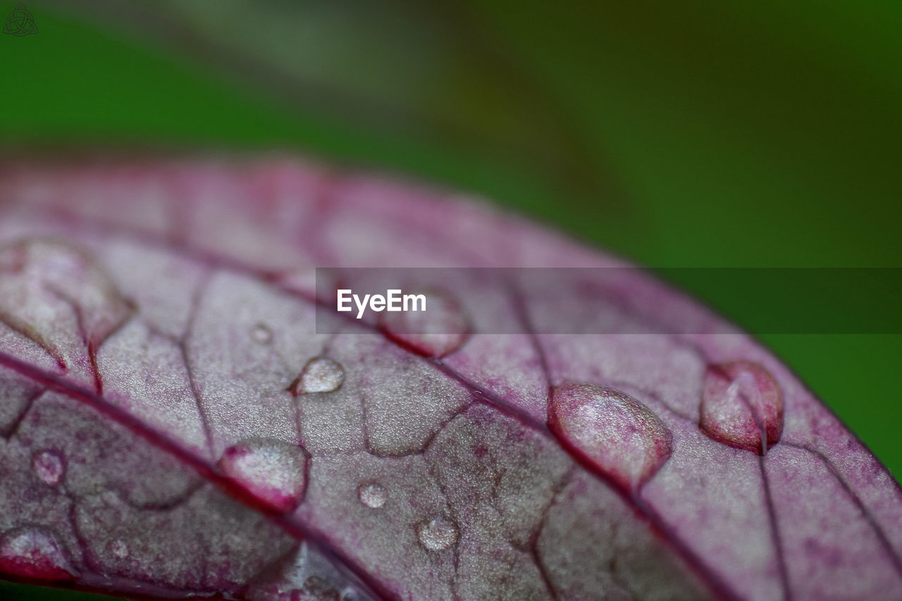 leaf, close-up, drop, nature, no people, water, fragility, beauty in nature, day, outdoors, freshness