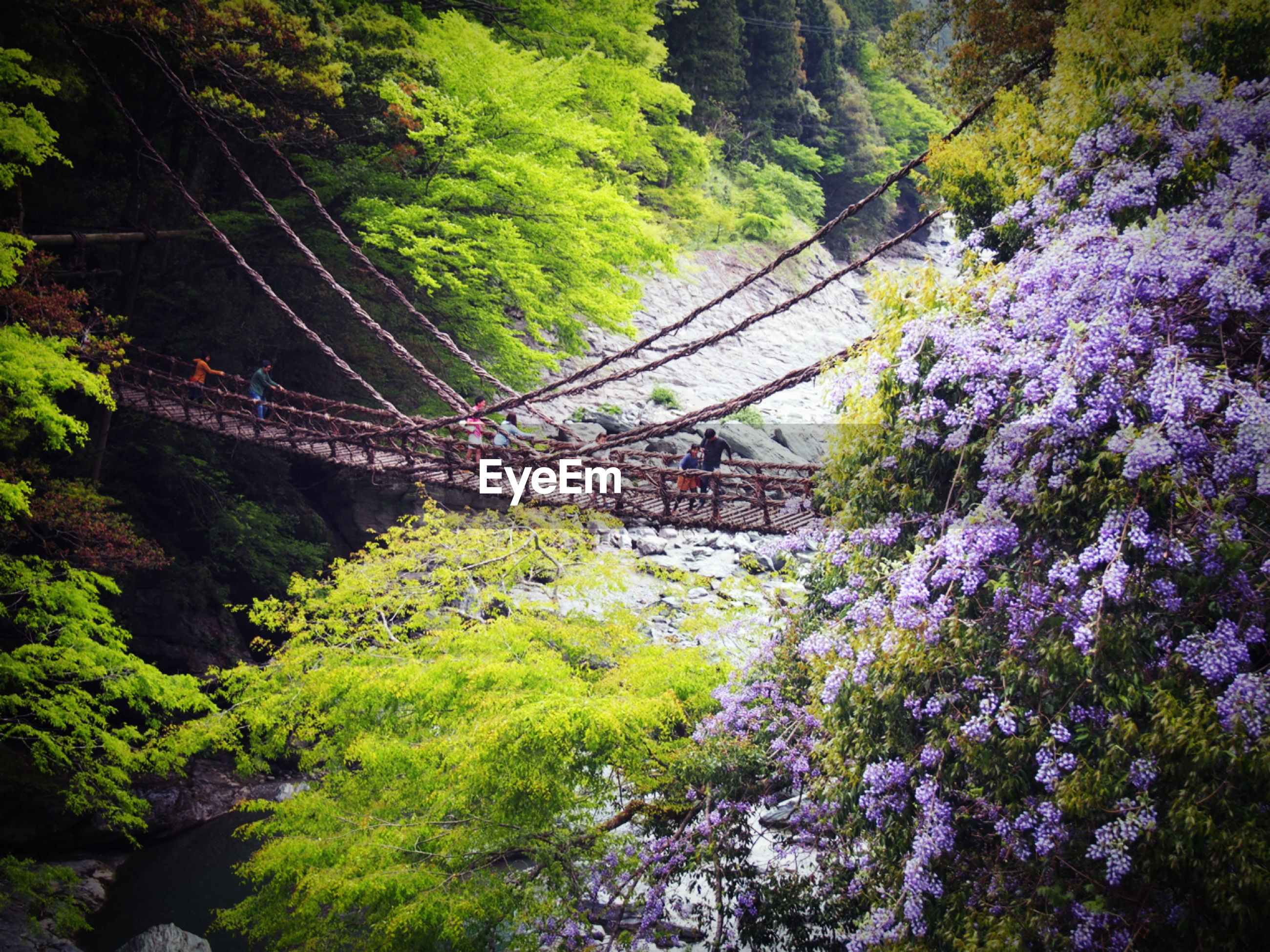 tree, connection, transportation, bridge - man made structure, growth, green color, plant, flower, nature, built structure, footbridge, day, forest, travel, high angle view, bridge, beauty in nature, lush foliage, railing, outdoors
