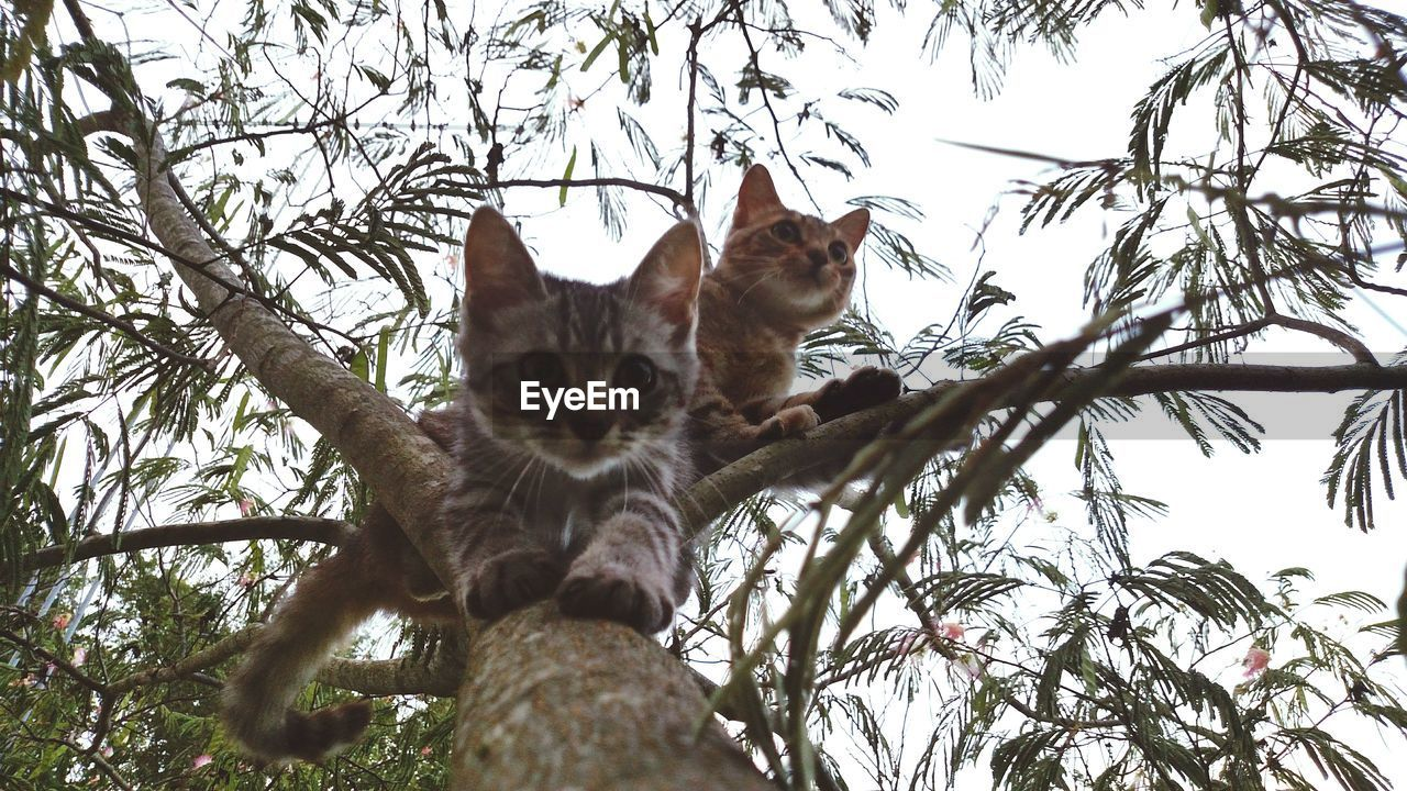 Low angle view of tabbies on tree