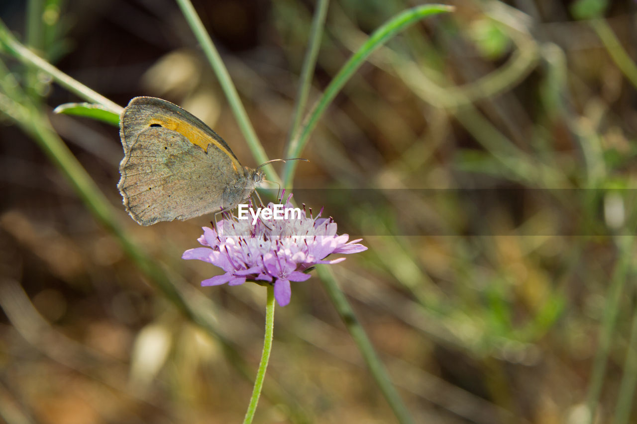 flower, nature, insect, plant, one animal, no people, close-up, growth, fragility, day, outdoors, animals in the wild, animal themes, focus on foreground, beauty in nature, butterfly - insect, freshness, flower head
