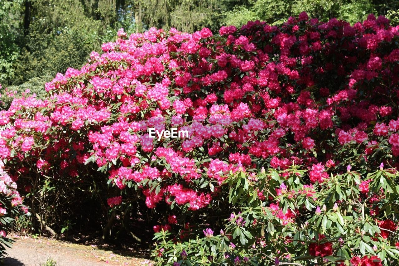flower, growth, pink color, summer, nature, plant, outdoors, day, no people, fragility, freshness, beauty in nature
