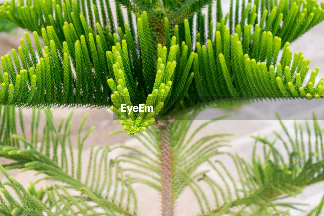 green color, growth, nature, close-up, plant, leaf, fern, day, beauty in nature, no people, outdoors, frond, freshness, fragility