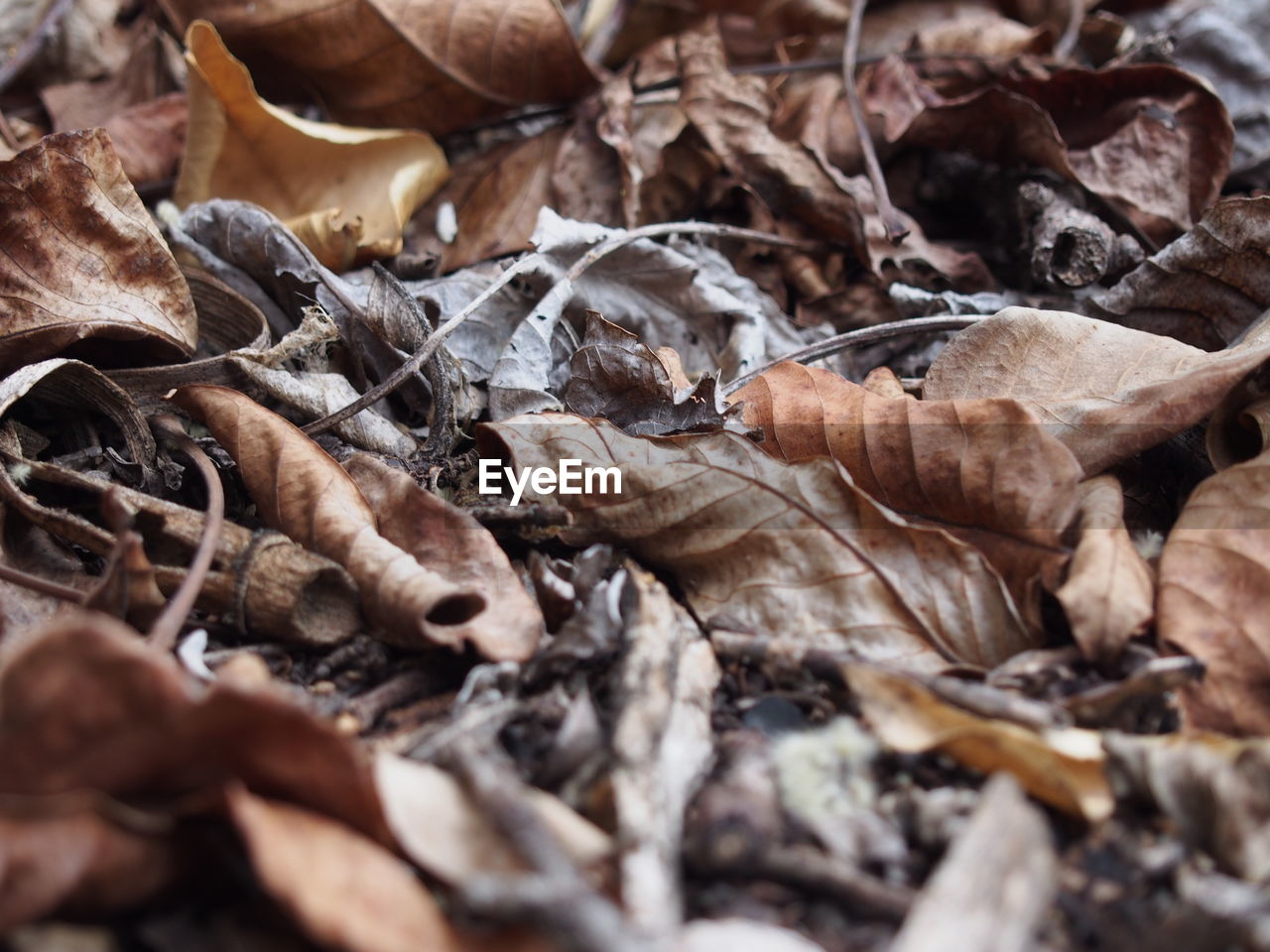 dry, leaf, autumn, change, nature, no people, large group of objects, close-up, dried plant, full frame, backgrounds, day, outdoors, fragility, food