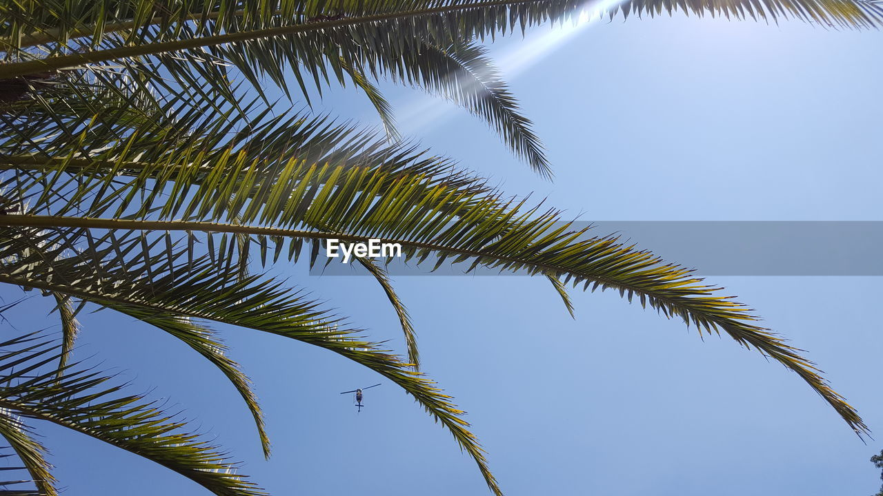 nature, low angle view, growth, palm tree, tree, no people, clear sky, day, outdoors, beauty in nature, sky