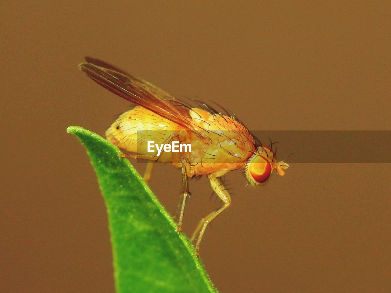 invertebrate, insect, animal themes, one animal, animal, animals in the wild, animal wildlife, close-up, leaf, plant part, nature, animal wing, no people, green color, fly, animal body part, day, focus on foreground, plant, outdoors, animal eye