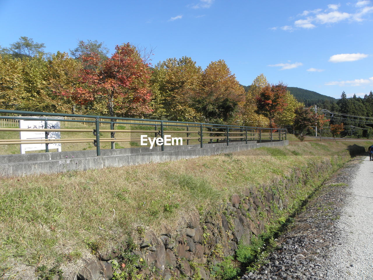 plant, tree, nature, barrier, boundary, growth, sky, day, no people, fence, railing, autumn, change, beauty in nature, field, footpath, land, tranquility, outdoors, grass