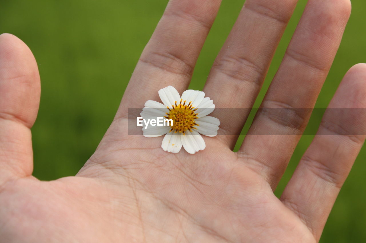 human hand, human body part, flower, hand, flowering plant, plant, real people, body part, one person, freshness, vulnerability, close-up, fragility, beauty in nature, unrecognizable person, holding, inflorescence, nature, finger, flower head, human limb