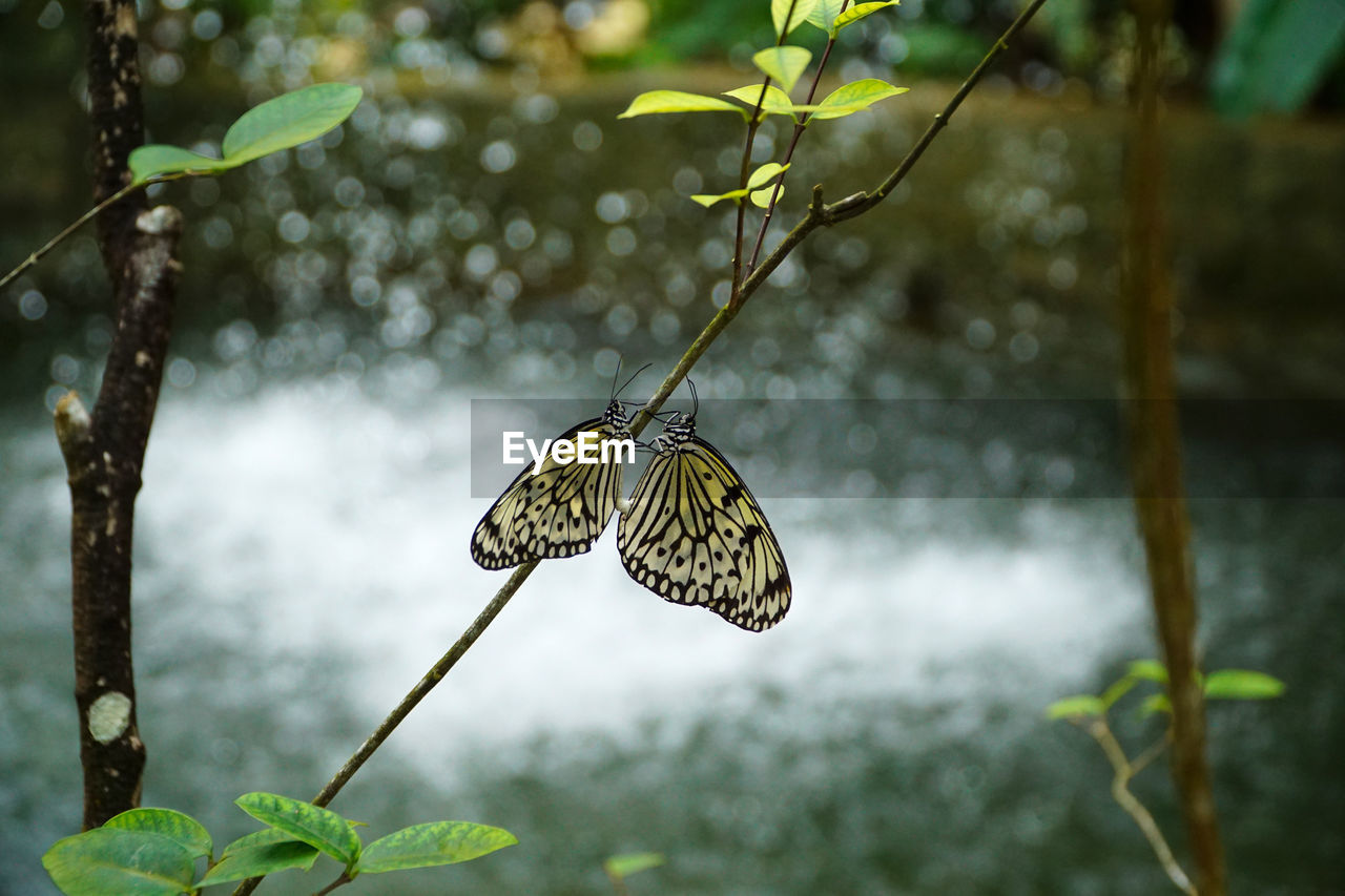 animal wildlife, animals in the wild, animal themes, one animal, animal, beauty in nature, animal wing, focus on foreground, plant, insect, invertebrate, butterfly - insect, nature, plant part, day, leaf, no people, growth, close-up, outdoors, butterfly