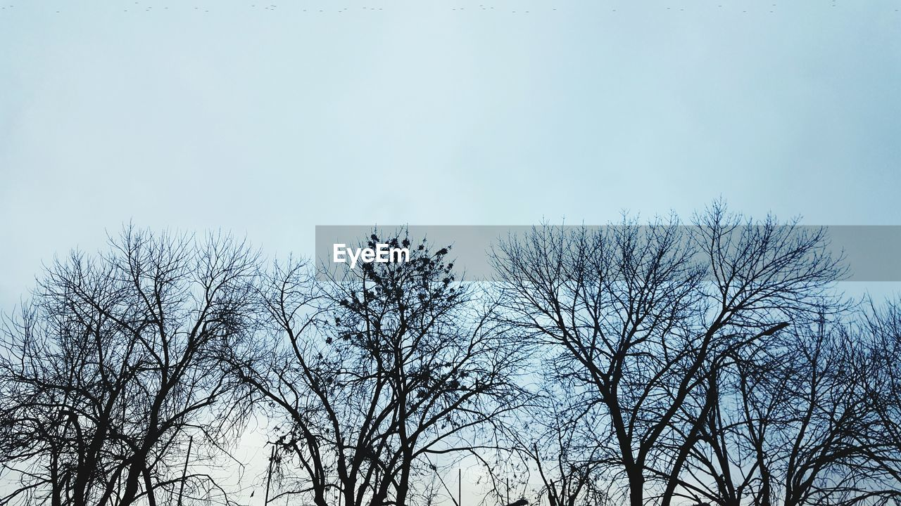 bare tree, low angle view, nature, tree, branch, outdoors, day, beauty in nature, no people, sky, tranquility, scenics, clear sky