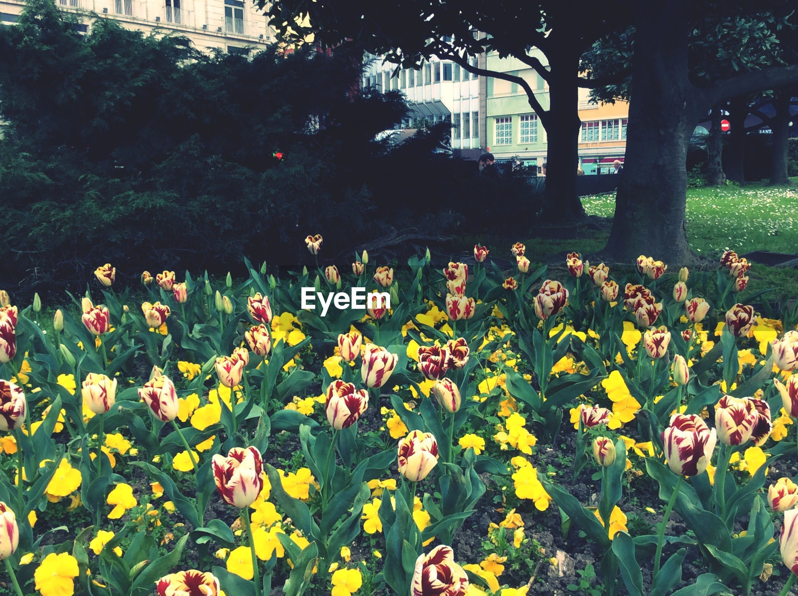 flower, growth, plant, leaf, nature, tree, park - man made space, grass, green color, beauty in nature, freshness, lawn, field, fragility, day, outdoors, blooming, front or back yard