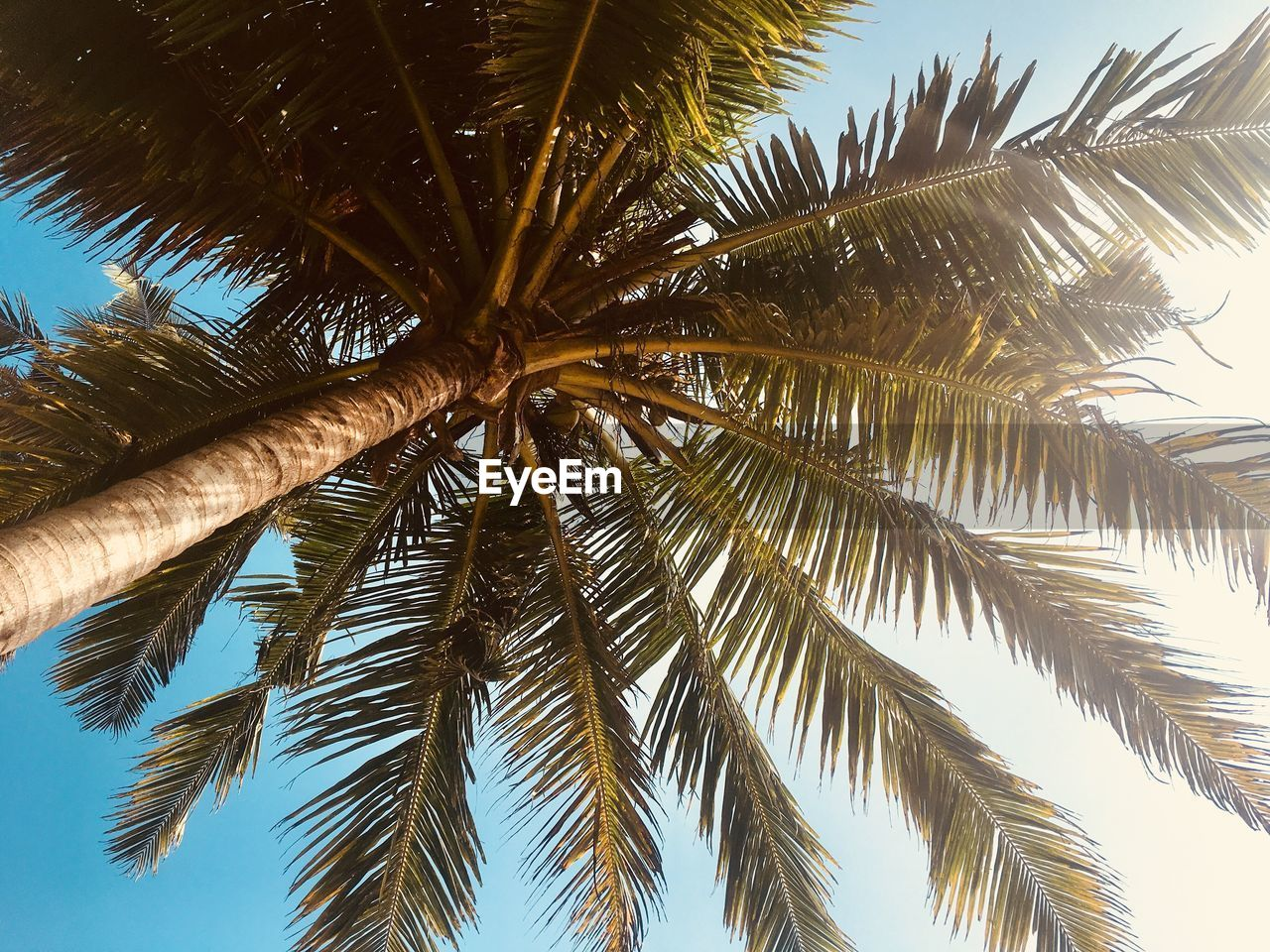 palm tree, low angle view, tree, nature, beauty in nature, day, no people, palm frond, outdoors, sky, growth, tree trunk, clear sky, close-up