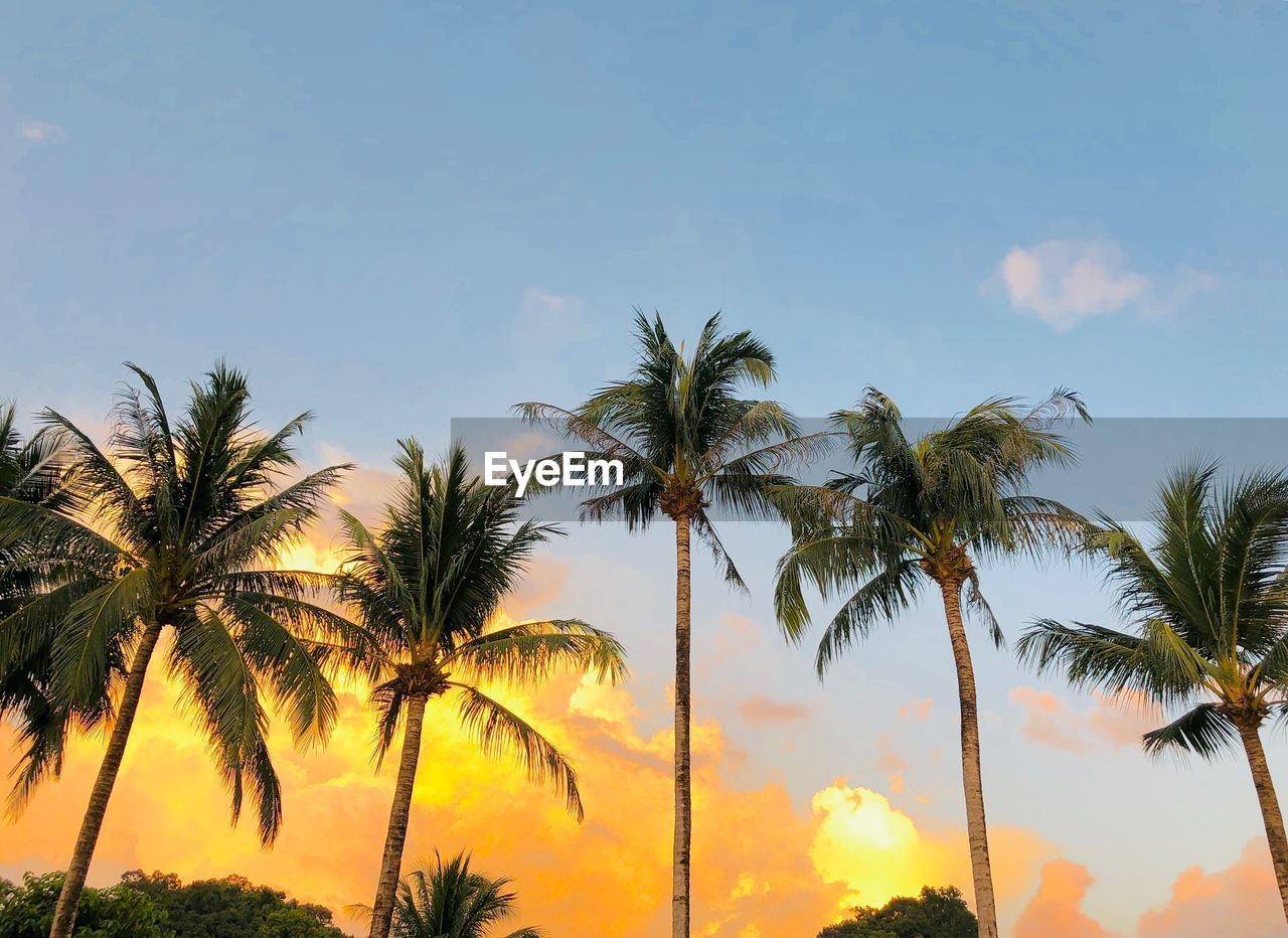 sky, palm tree, tropical climate, tree, plant, beauty in nature, tranquility, cloud - sky, low angle view, scenics - nature, growth, tranquil scene, nature, sunset, no people, coconut palm tree, outdoors, idyllic, tree trunk, trunk, tropical tree, palm leaf