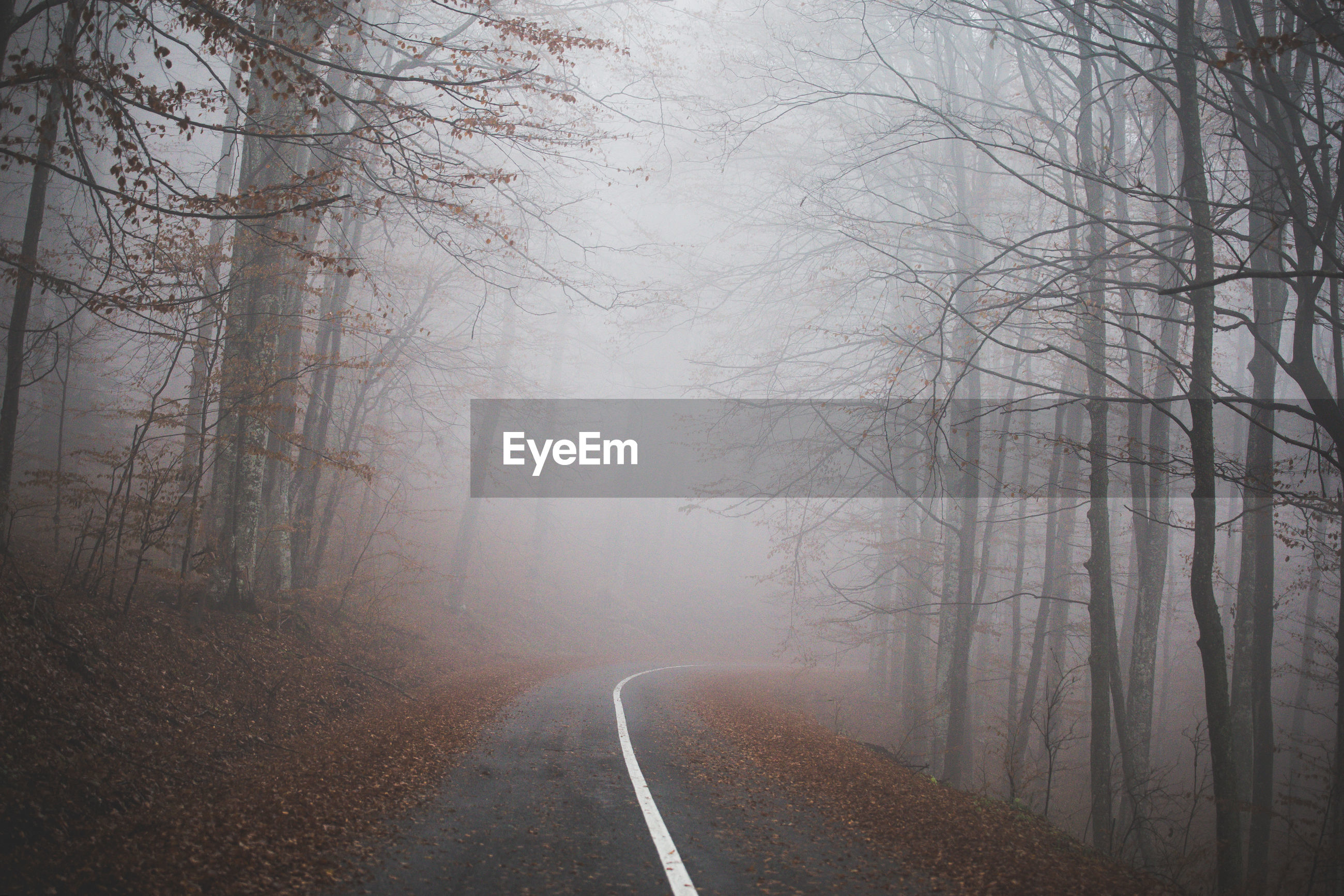 Road amidst trees in fog