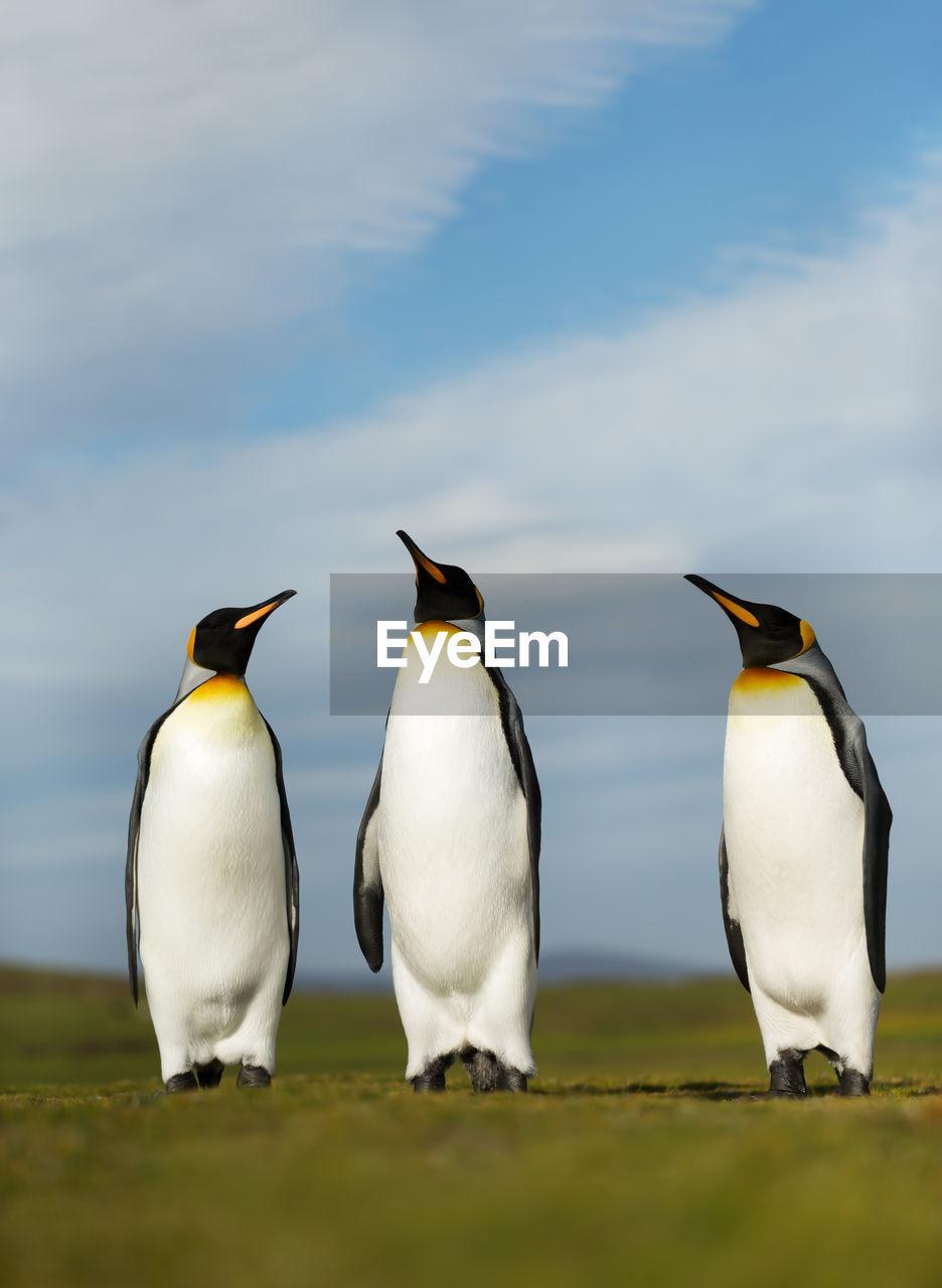 Penguins perching on land against sky