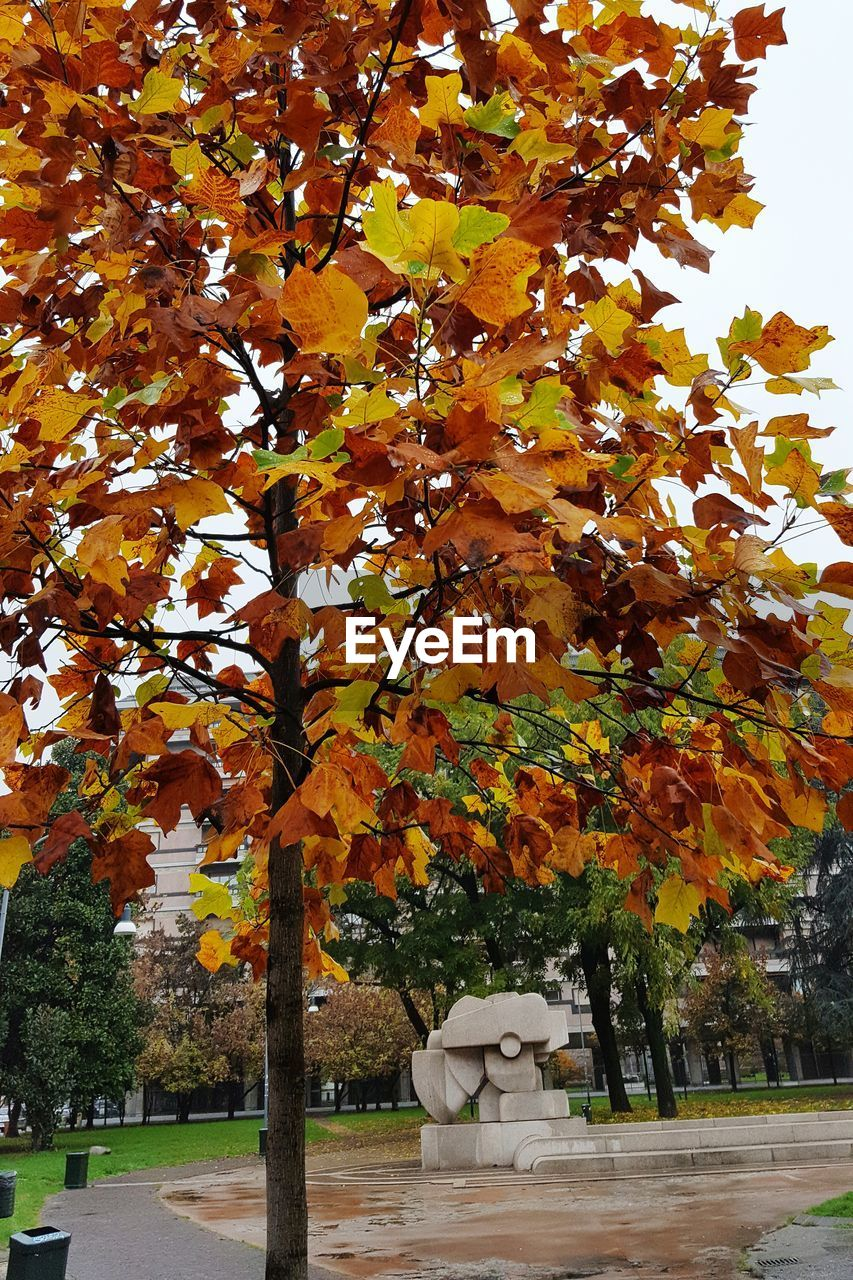 autumn, tree, leaf, change, nature, beauty in nature, growth, no people, day, outdoors, tranquility, branch, maple tree, park - man made space, scenics, maple, sky