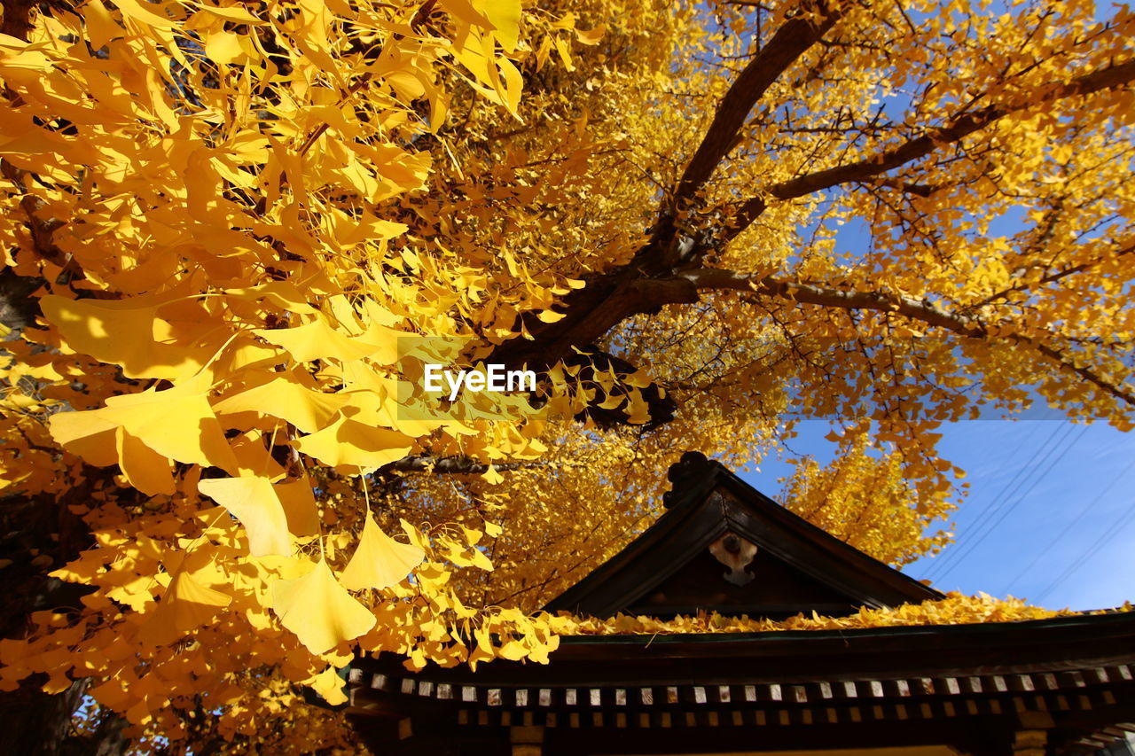 tree, built structure, architecture, building exterior, branch, low angle view, autumn, beauty in nature, nature, outdoors, growth, day, religion, place of worship, leaf, no people, spirituality, yellow, scenics, sky, tiled roof