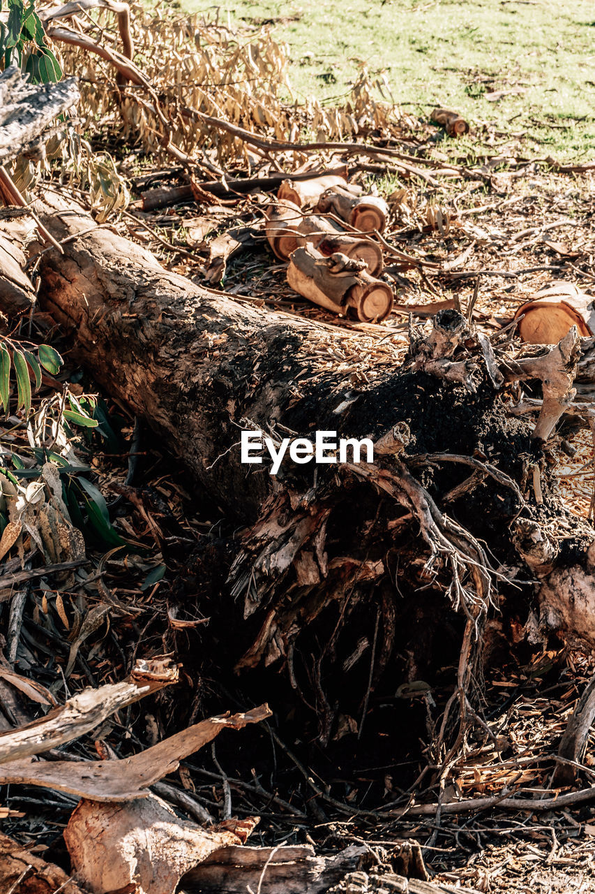 forest, land, tree, nature, day, field, no people, plant, wood - material, plant part, high angle view, deforestation, leaf, dry, close-up, outdoors, falling, environmental issues, sunlight, wood, messy, stick - plant part, bark