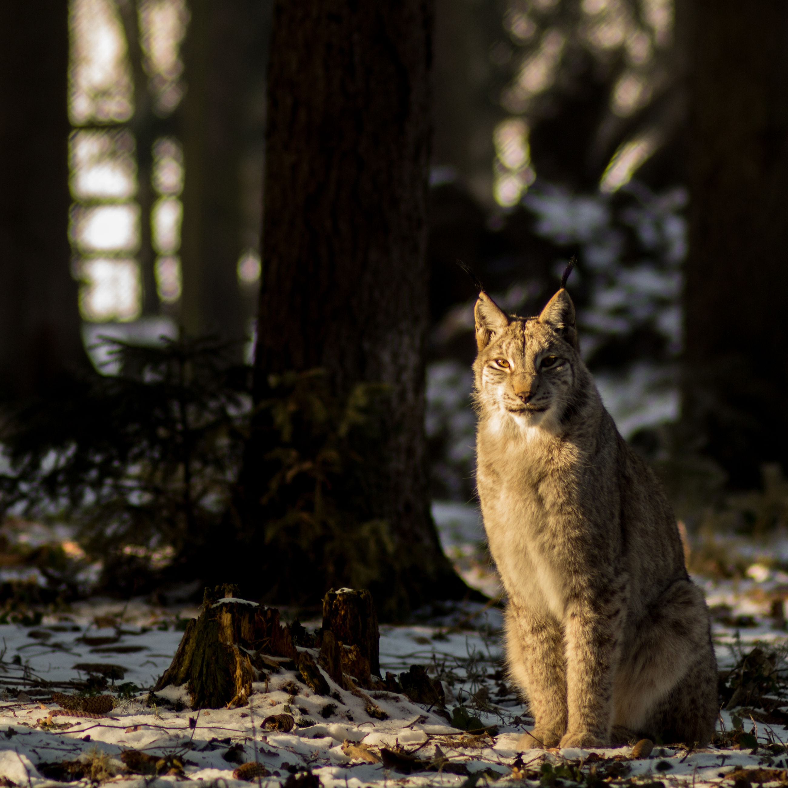 Cat sitting on tree trunk in forest