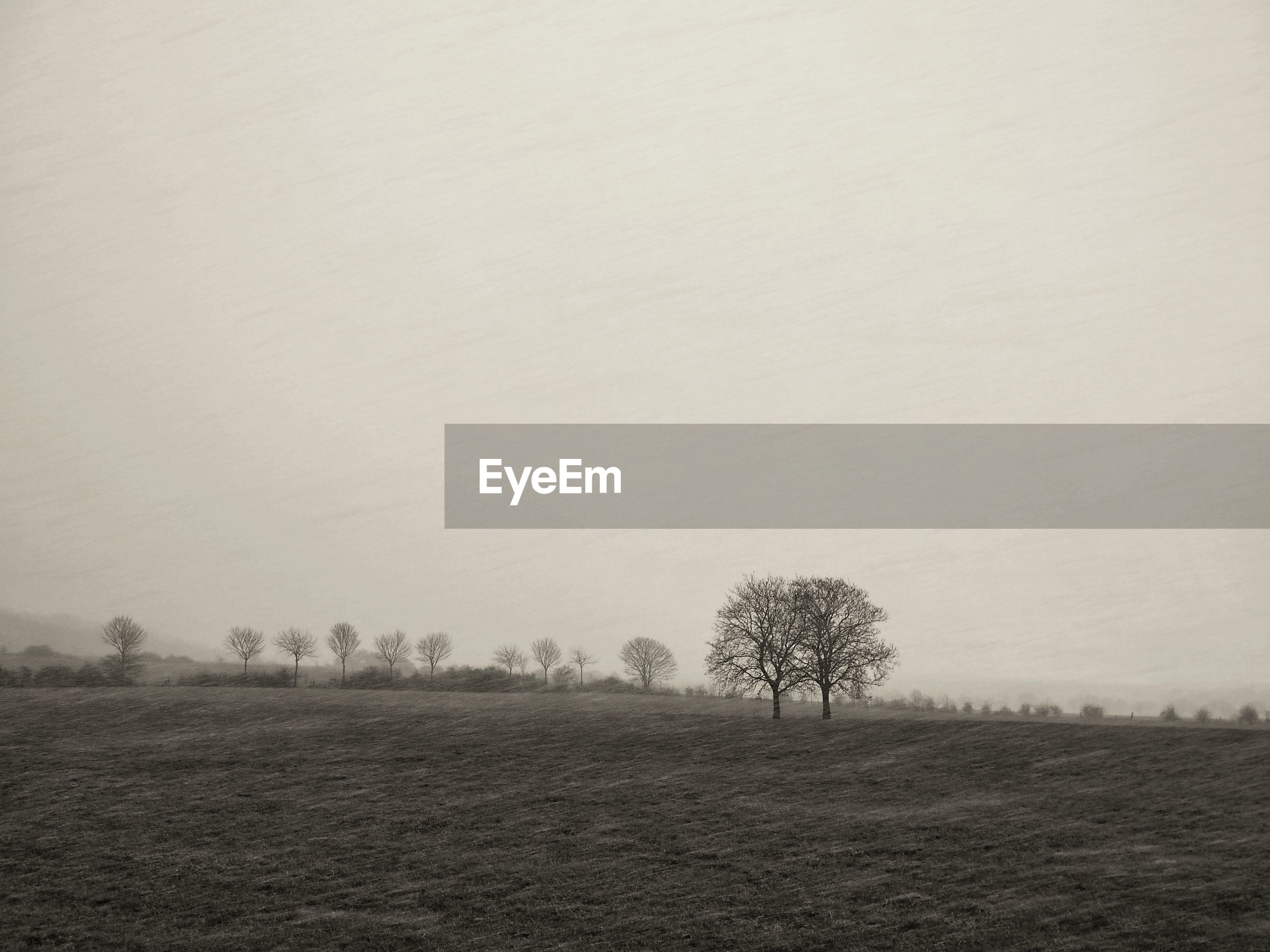 tree, field, environment, landscape, land, plant, tranquil scene, tranquility, scenics - nature, sky, beauty in nature, no people, fog, non-urban scene, copy space, nature, day, remote, outdoors, isolated
