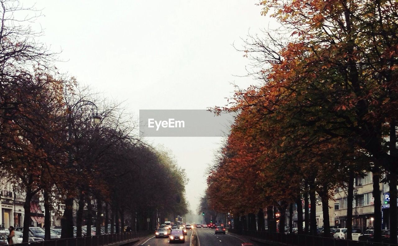 Autumn trees by city street