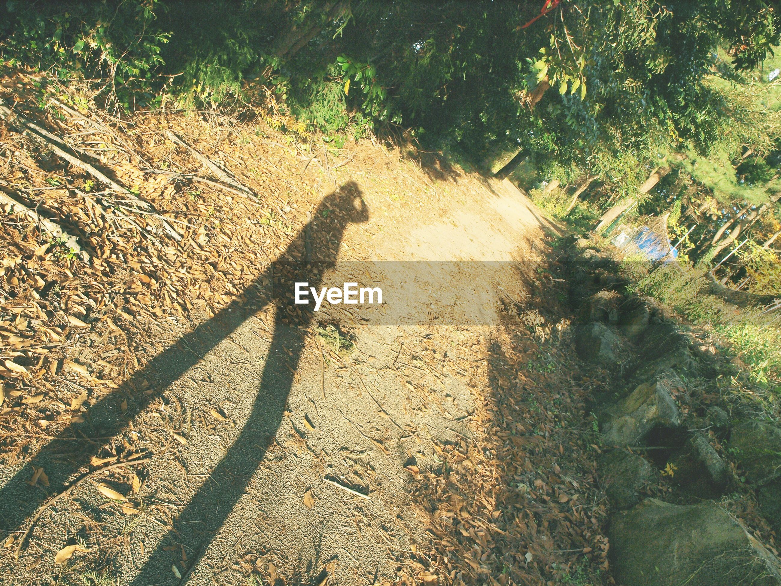HIGH ANGLE VIEW OF SHADOW OF TREE ON GROUND