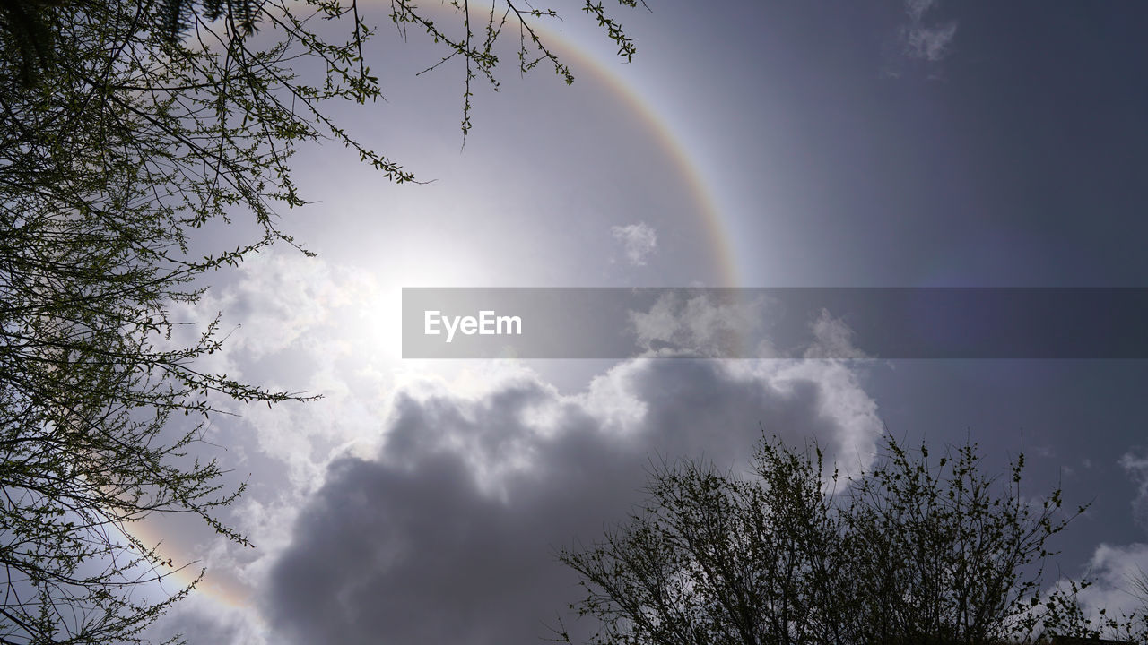 tree, sky, plant, low angle view, beauty in nature, cloud - sky, rainbow, scenics - nature, nature, no people, day, tranquility, sunlight, branch, tranquil scene, idyllic, outdoors, growth, lens flare, treetop, meteorology, solar flare