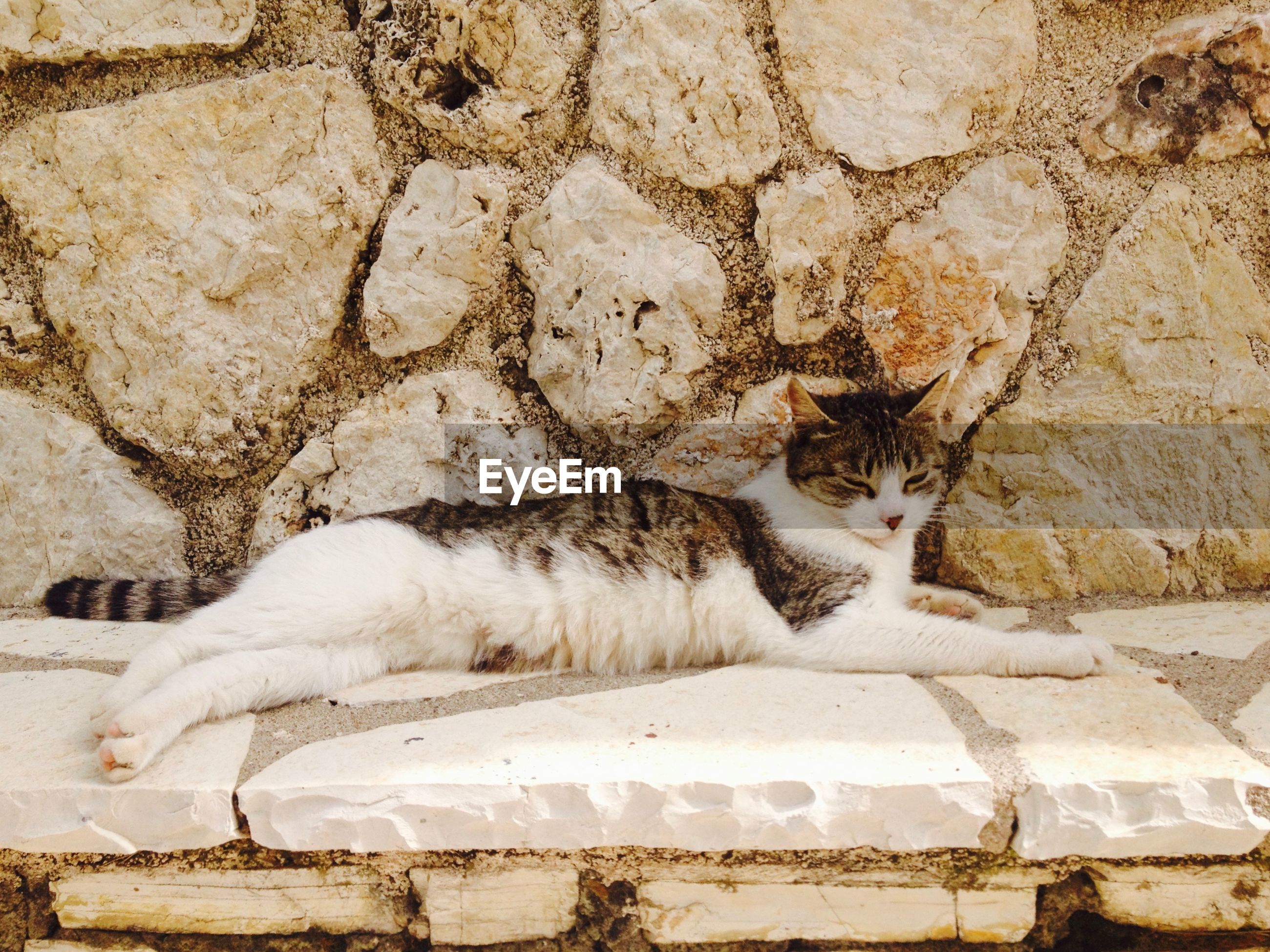 Cat relaxing against wall