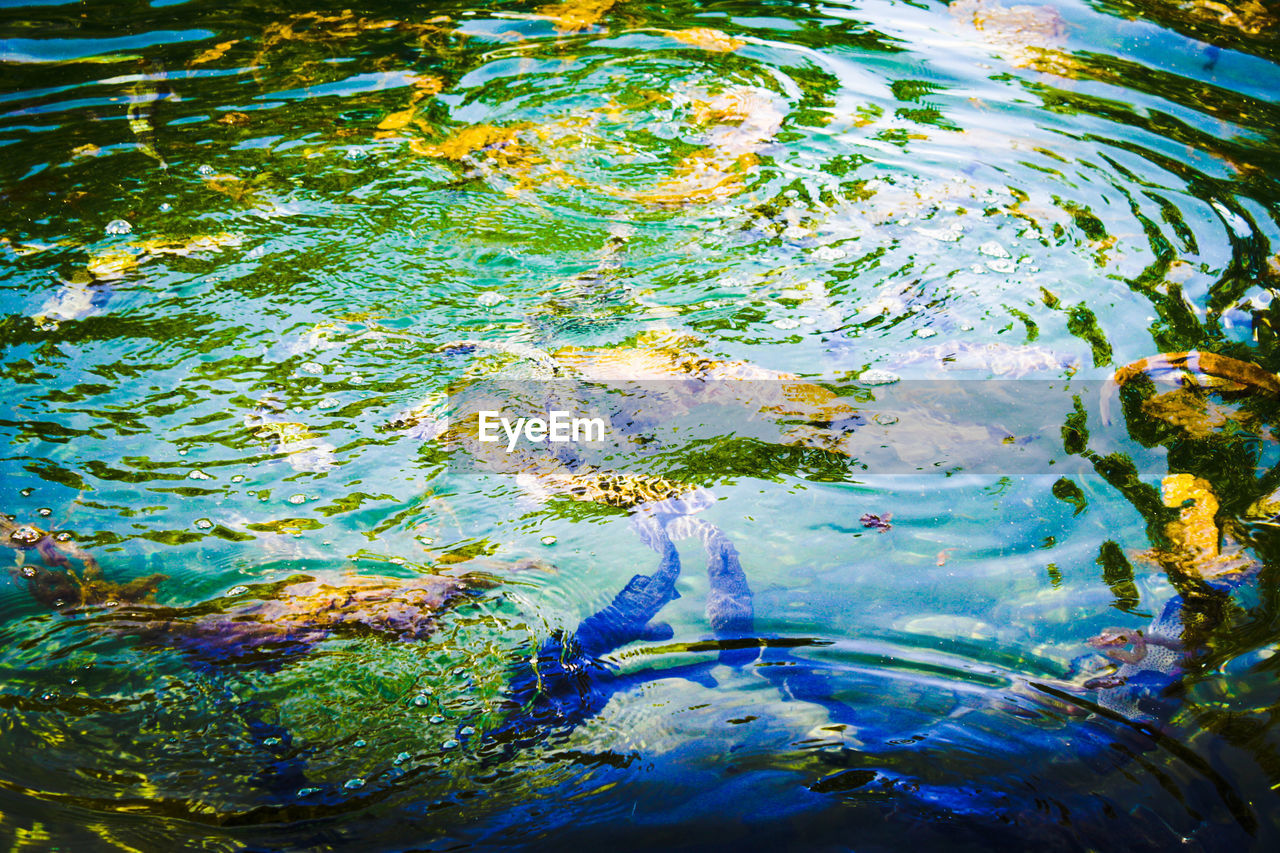 water, rippled, high angle view, fish, outdoors, day, waterfront, floating on water, no people, animal themes, nature, sea life, close-up, undersea