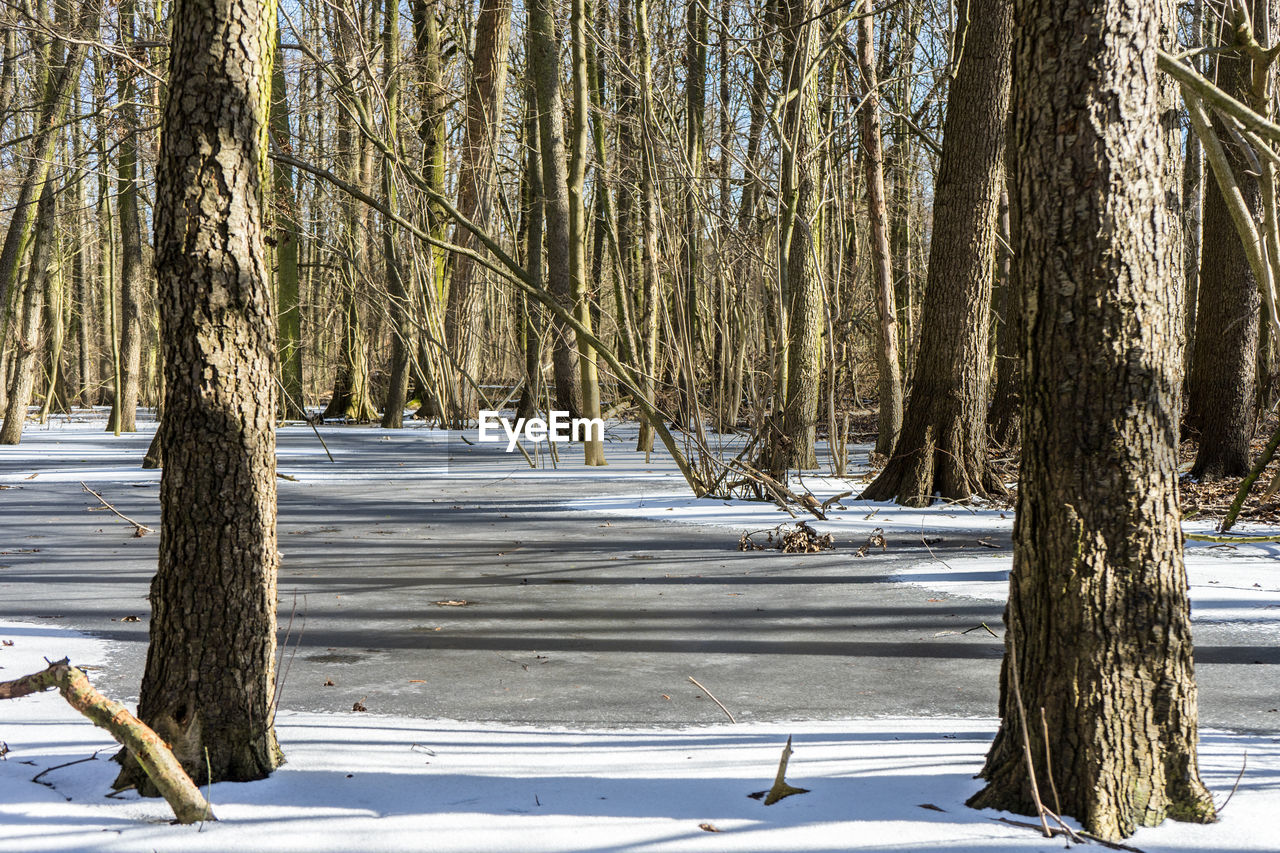 snow, winter, cold temperature, tree, nature, tree trunk, beauty in nature, weather, outdoors, tranquility, bare tree, tranquil scene, day, branch, no people, scenics, frozen, lake, landscape, water, sky