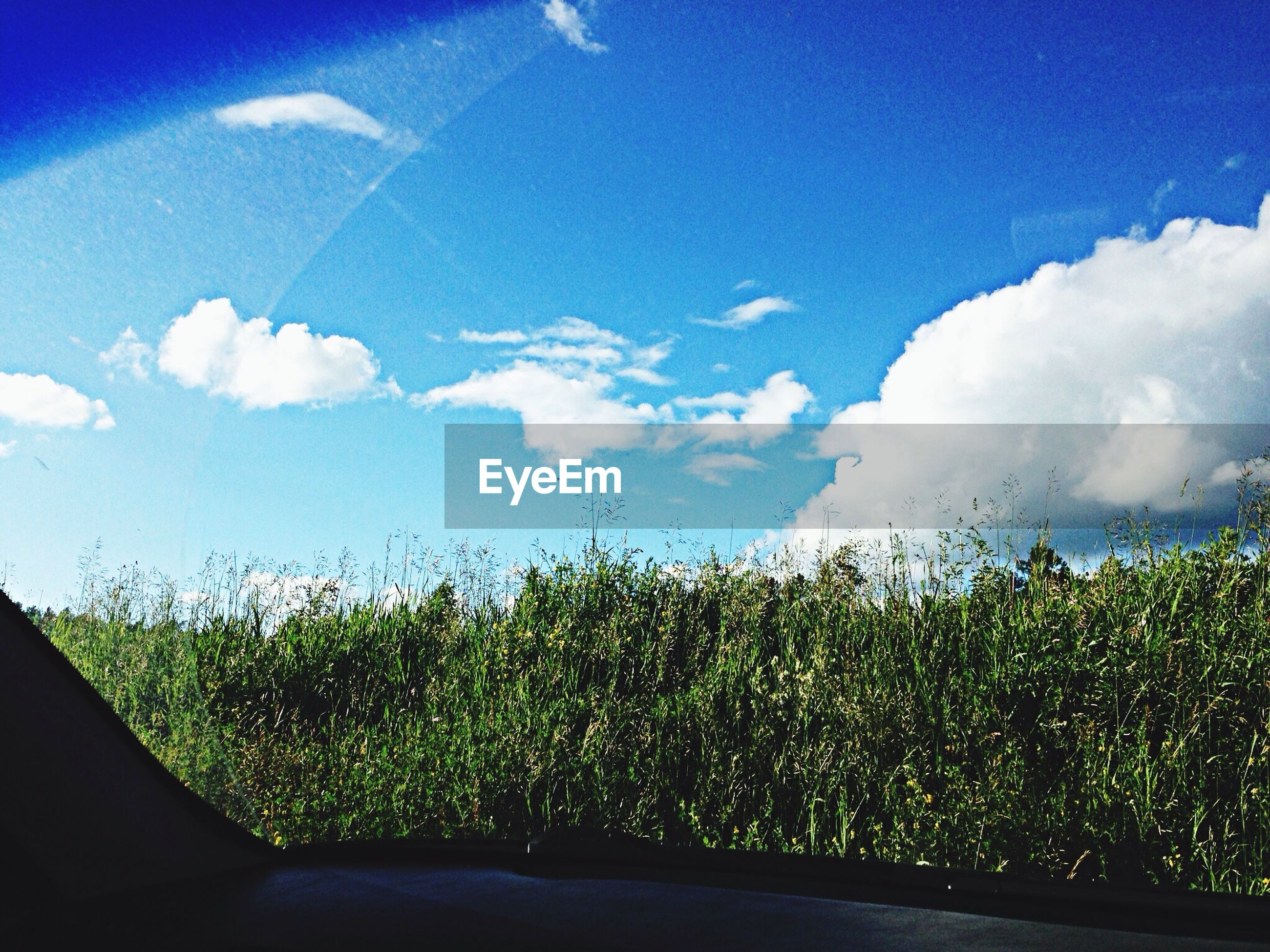 sky, blue, tree, transportation, road, nature, growth, cloud - sky, beauty in nature, transparent, cloud, glass - material, green color, sunlight, tranquility, day, scenics, window, tranquil scene, car