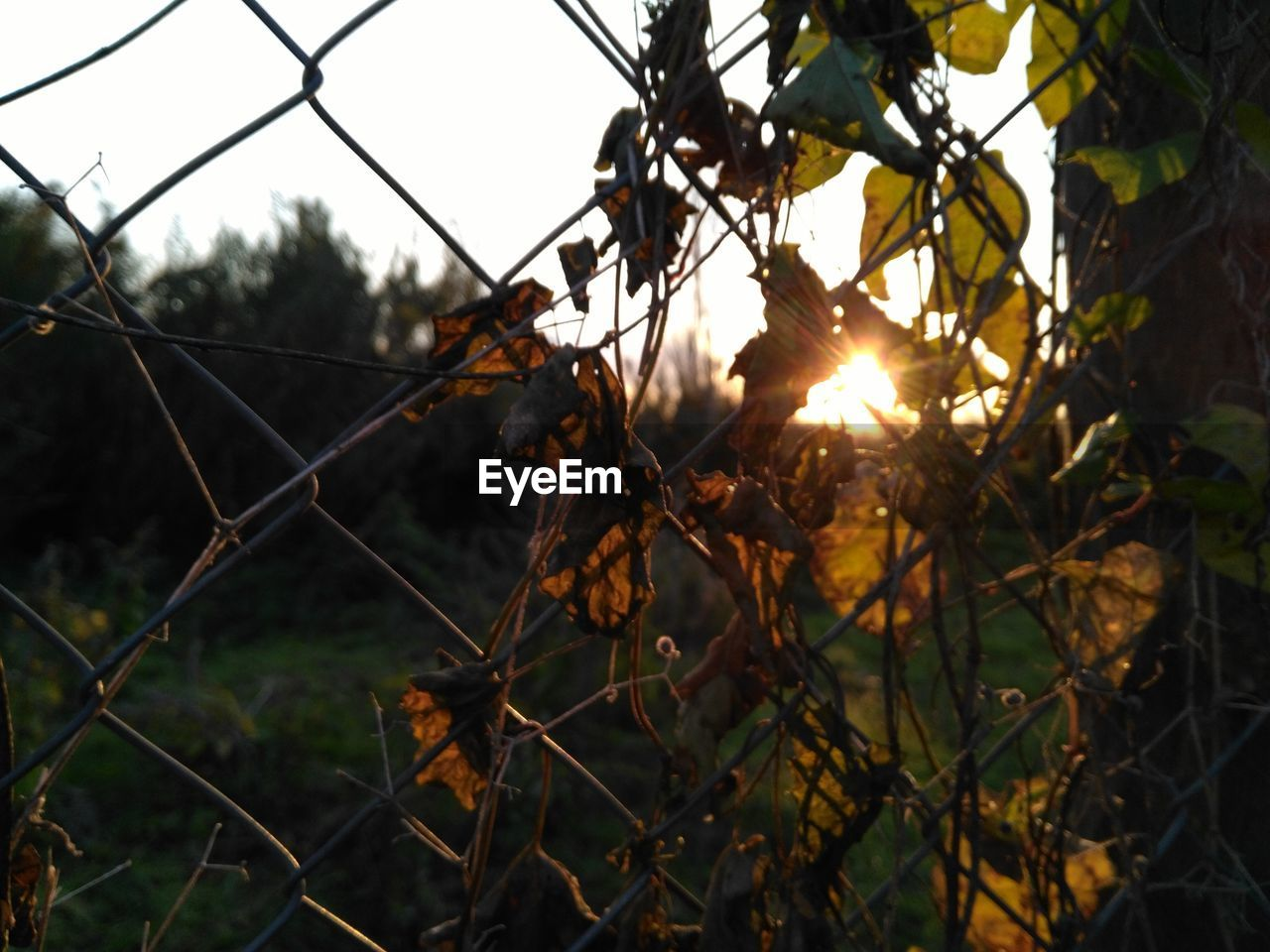 Close-Up Of Chainlink Fence Against Sunset Sky