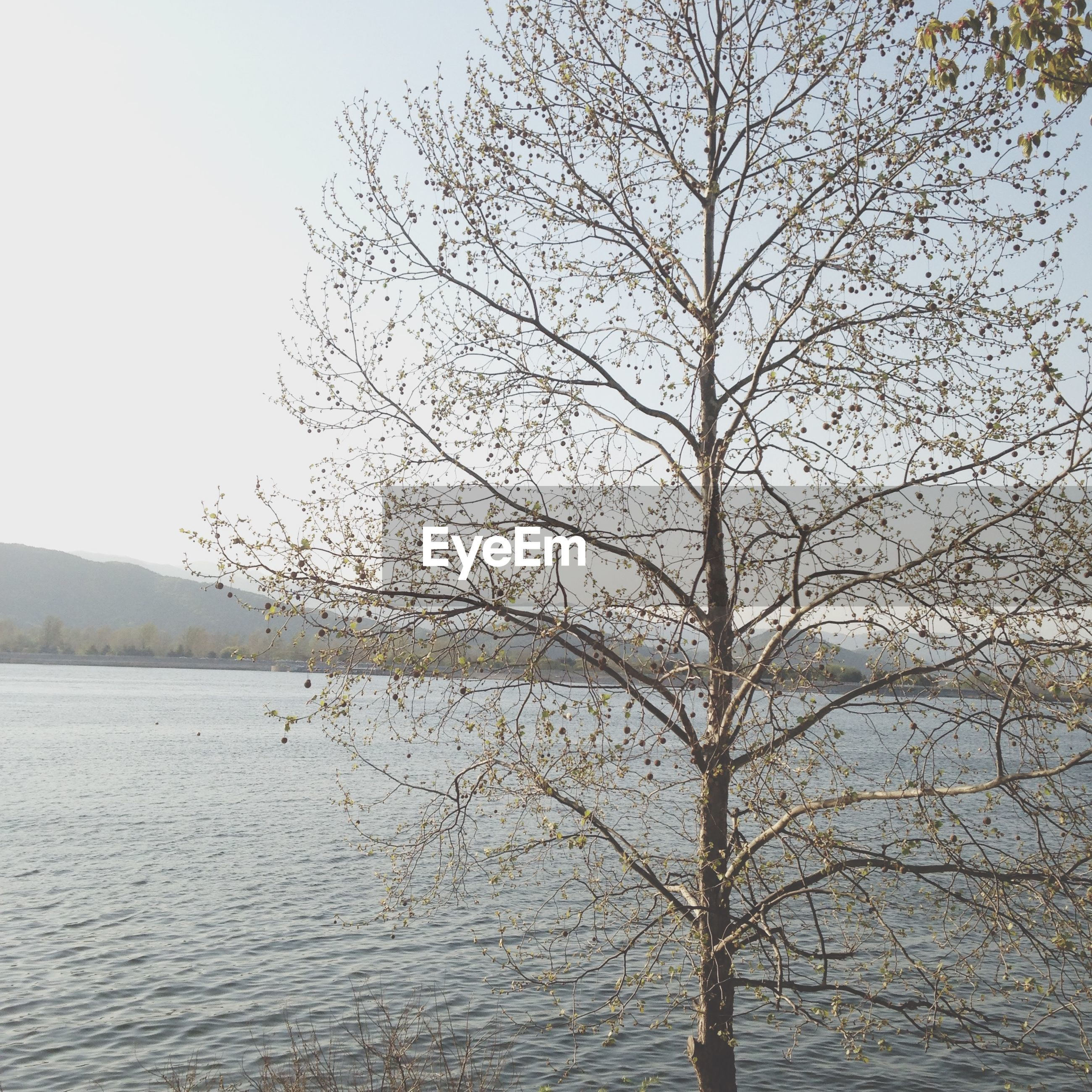 water, tranquility, tranquil scene, tree, bare tree, scenics, beauty in nature, nature, waterfront, clear sky, lake, branch, rippled, sky, river, idyllic, day, non-urban scene, outdoors, sea